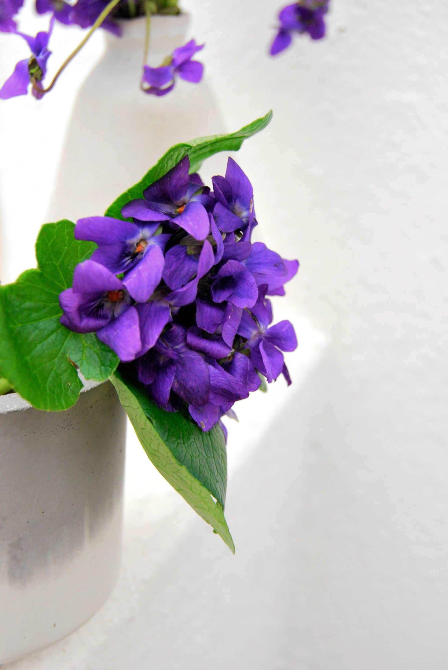 Wild Violets Rethinking Eliza Doolittles Favorite Flower Gardenista
