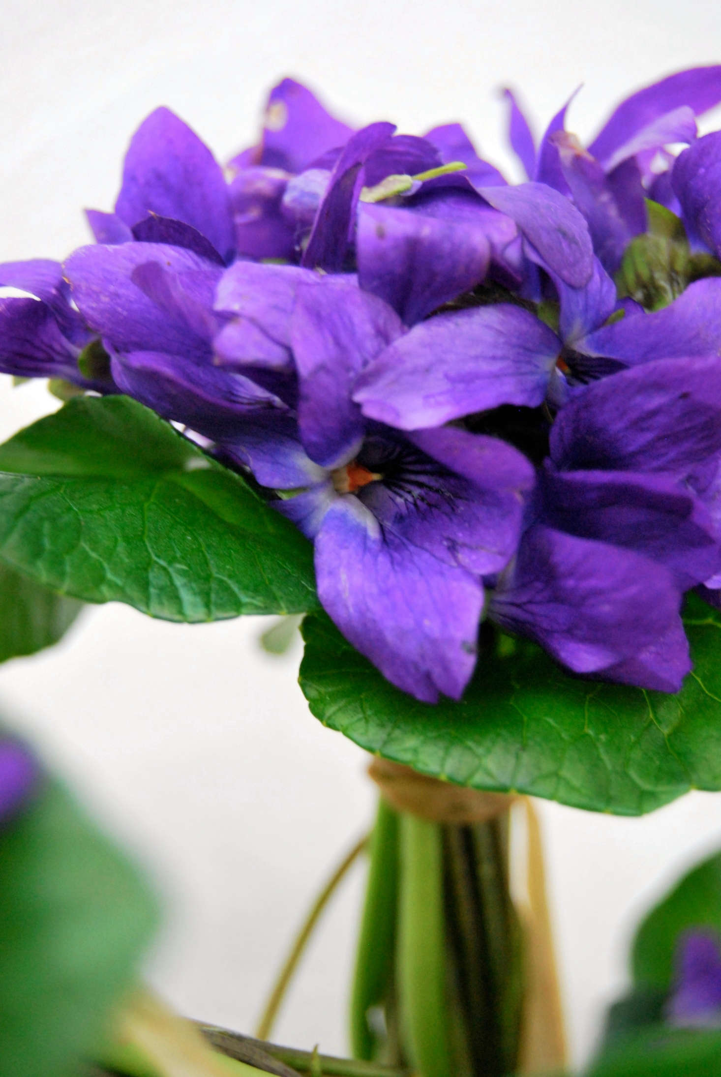 Using the flowers with their greenery offers support and and the contrast of the flowers against the leaves shows off the deep purple blossoms.
