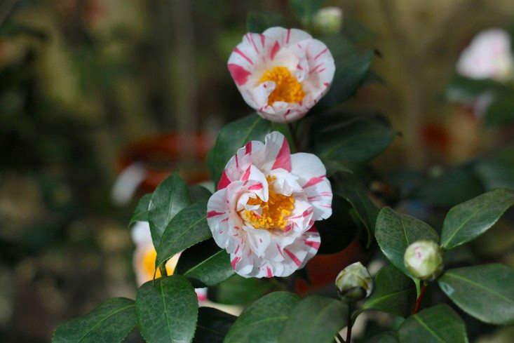 一个叫黑米尼加的香色。贾斯珀·福斯特。看看在维纳塔的另一头。