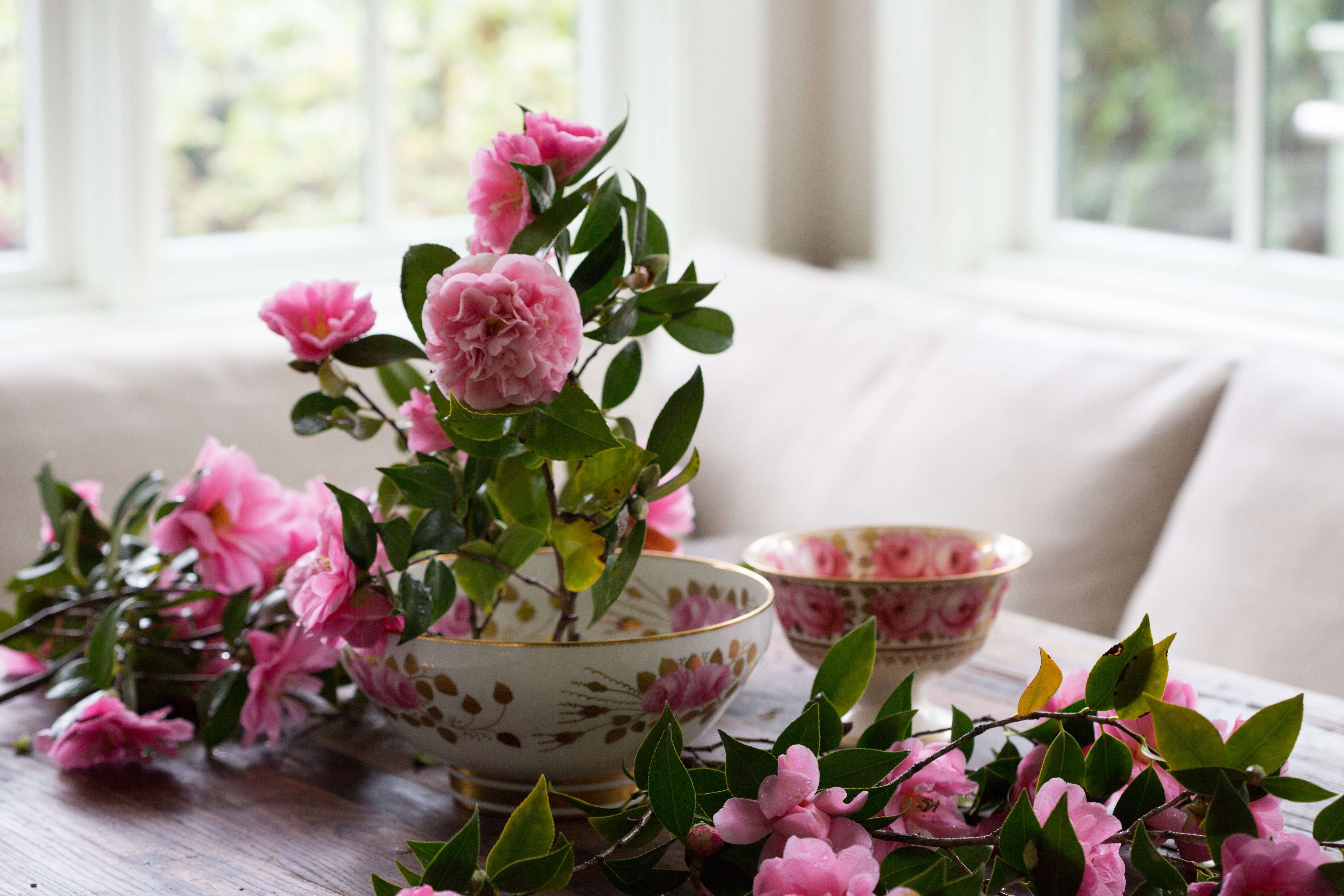 Rethinking Camellias A Formal Flower Learns To Relax Gardenista