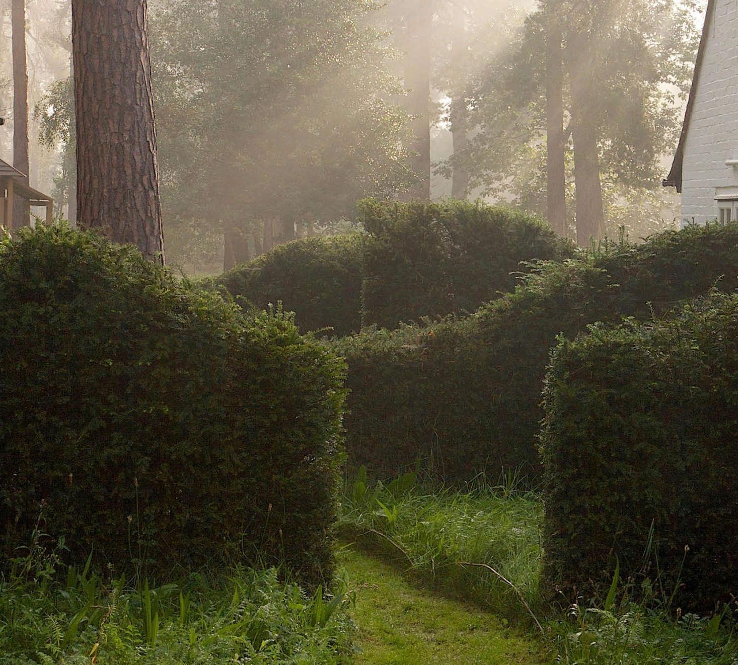 阿斯特·普勒斯·普斯特·普斯特在这里的一位游风中的人,沿着《看着的人》,穿过树林的方式,穿过了。