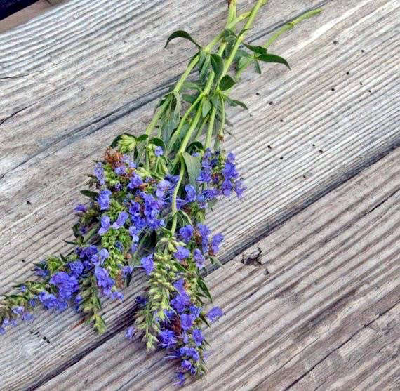 The Facts About How To Grow Hyssop Plants - Gardening Know How Uncovered