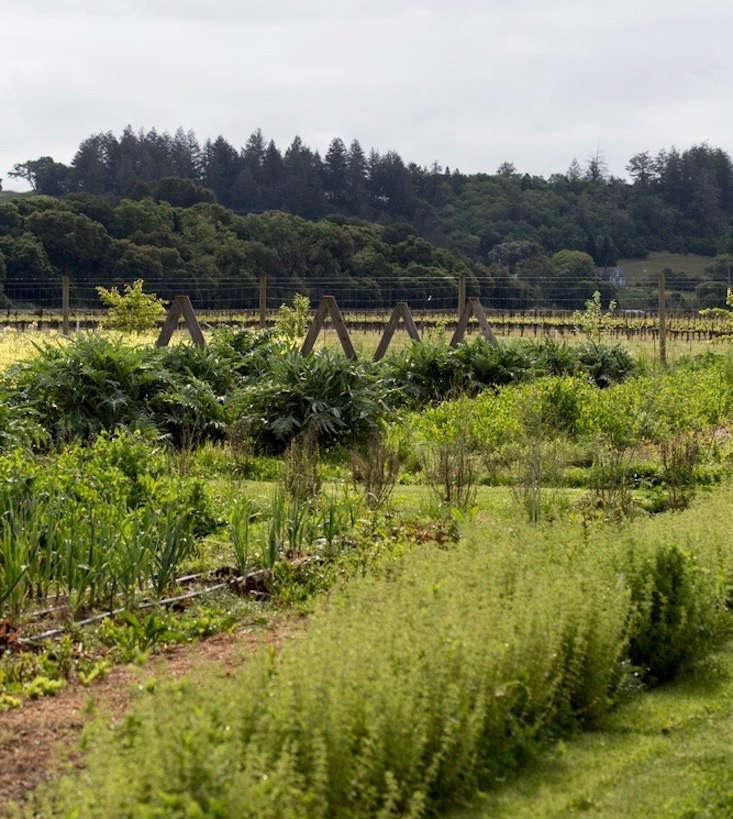从蔬菜和蔬菜里来的蔬菜,蔬菜,蔬菜种植的蔬菜,还有一种植物。