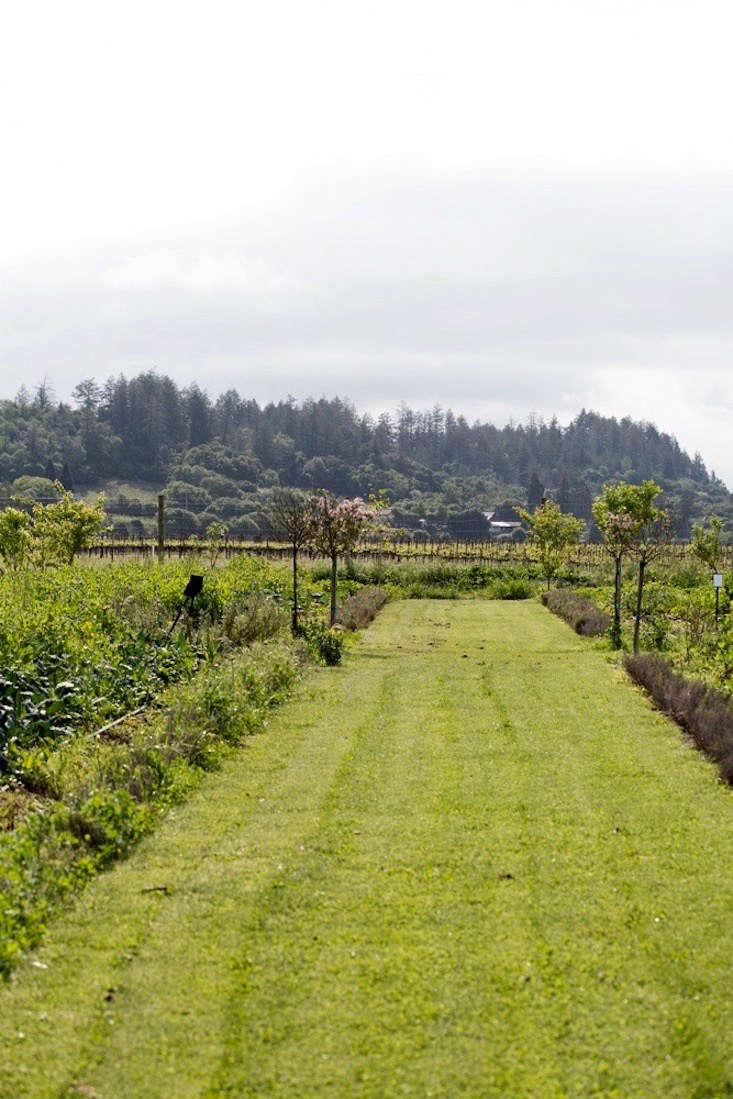 山谷中的山谷山谷里的葡萄和葡萄葡萄比葡萄还低。