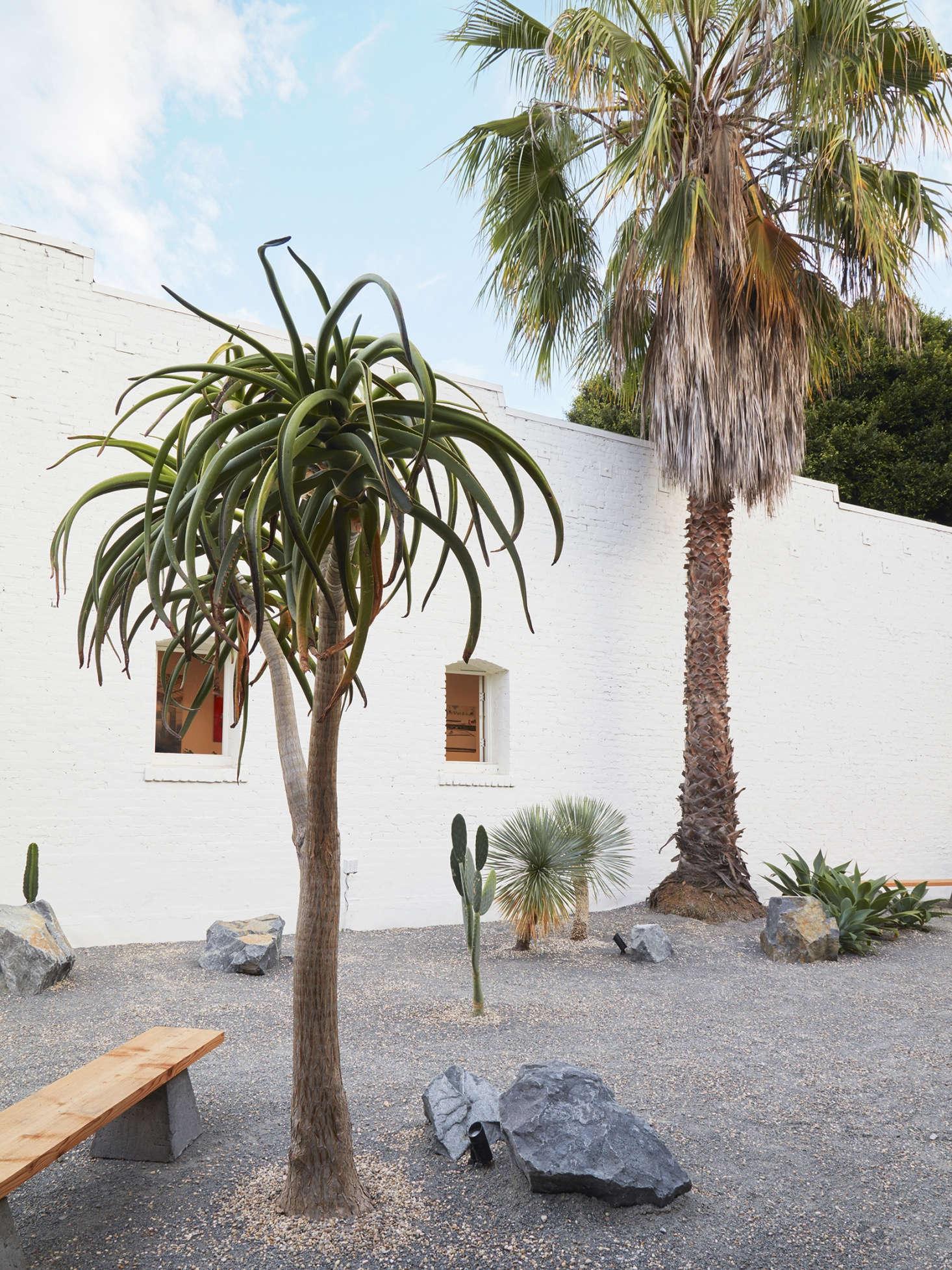 在另一个棕榈树上,用了一个大的铝树。