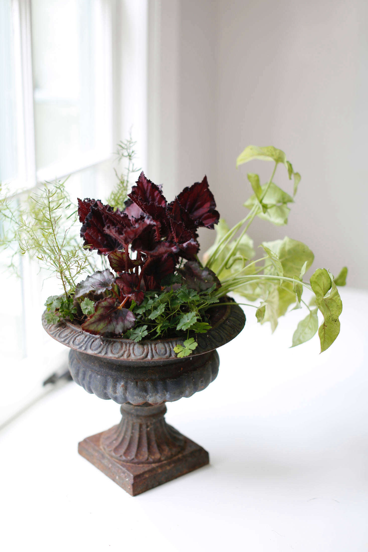 Houseplant Help 5 Tips To Keep Finicky Begonia Rex Alive