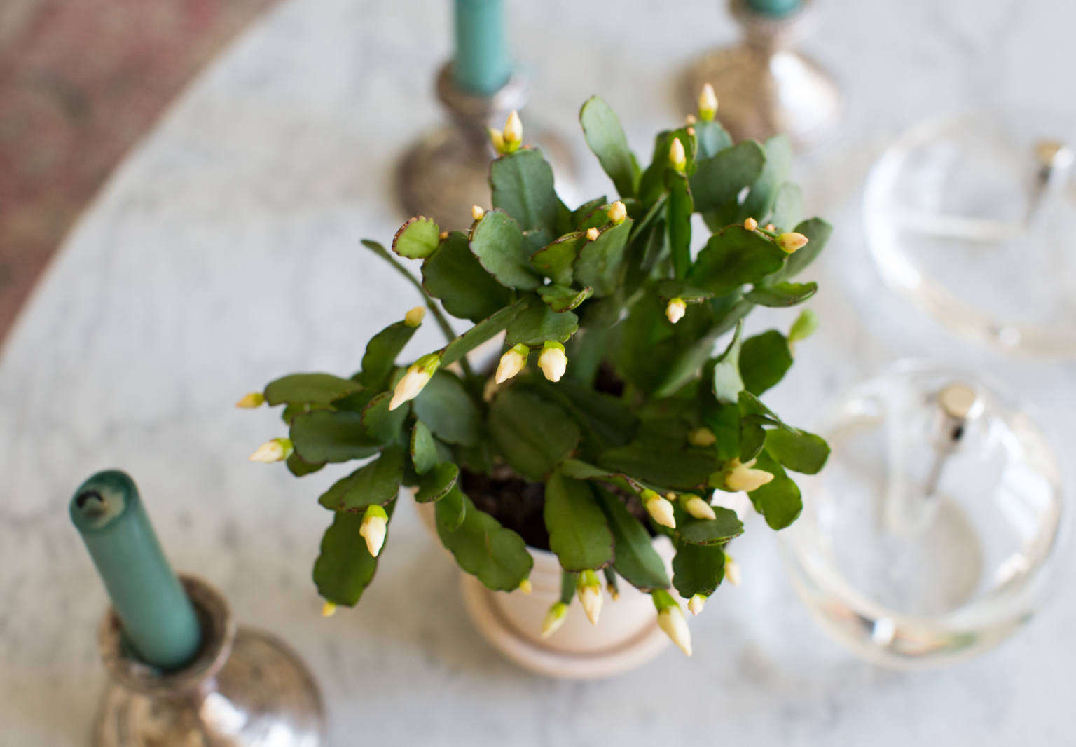 Easter Cactus Tips On How To Grow And Care For A Tropical