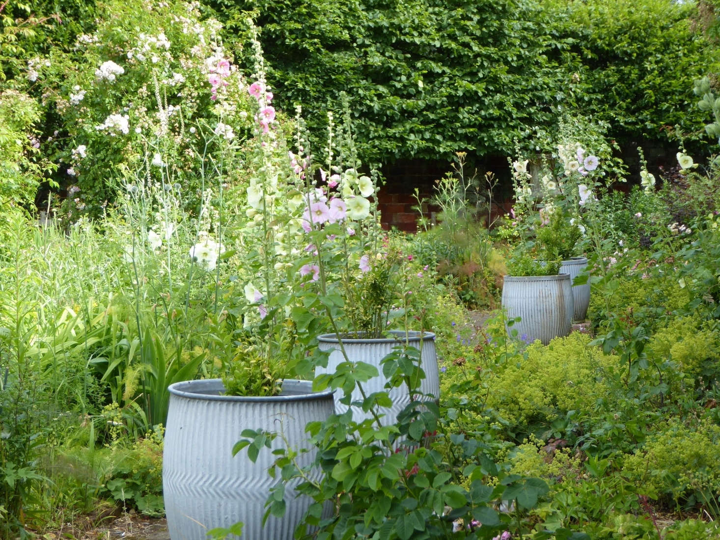 """At a former estate gardener's cottage in rural Suffolk, in England, galvanized dolly tubs set the tone """"for the wild feeling of the garden beyond with brick-edged beds spilling over with roses, Alchemilla mollis, and in midsummer lots of pastel-toned hollyhocks,"""" writes our contributor Clare Coulson. See more in English Cottage Gardening: 8 Lessons Learned in Rural Suffolk. Photograph by Clare Coulson."""
