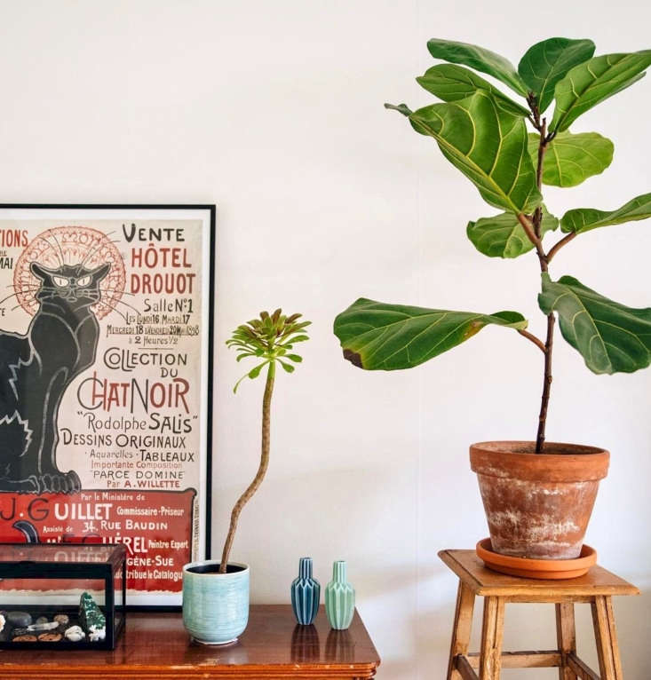 houseplant: 10 Best Hashtags to Explore on Instagram ... on rainbow root plant, rainbow pot plant, rainbow color plant, rainbow rose plant, rainbow house plant, rainbow star plant, rainbow strawberry plant, rainbow fire plant, rainbow iris plant, rainbow bamboo plant, rainbow bud plant, rainbow grass plant, rainbow butterfly plant,