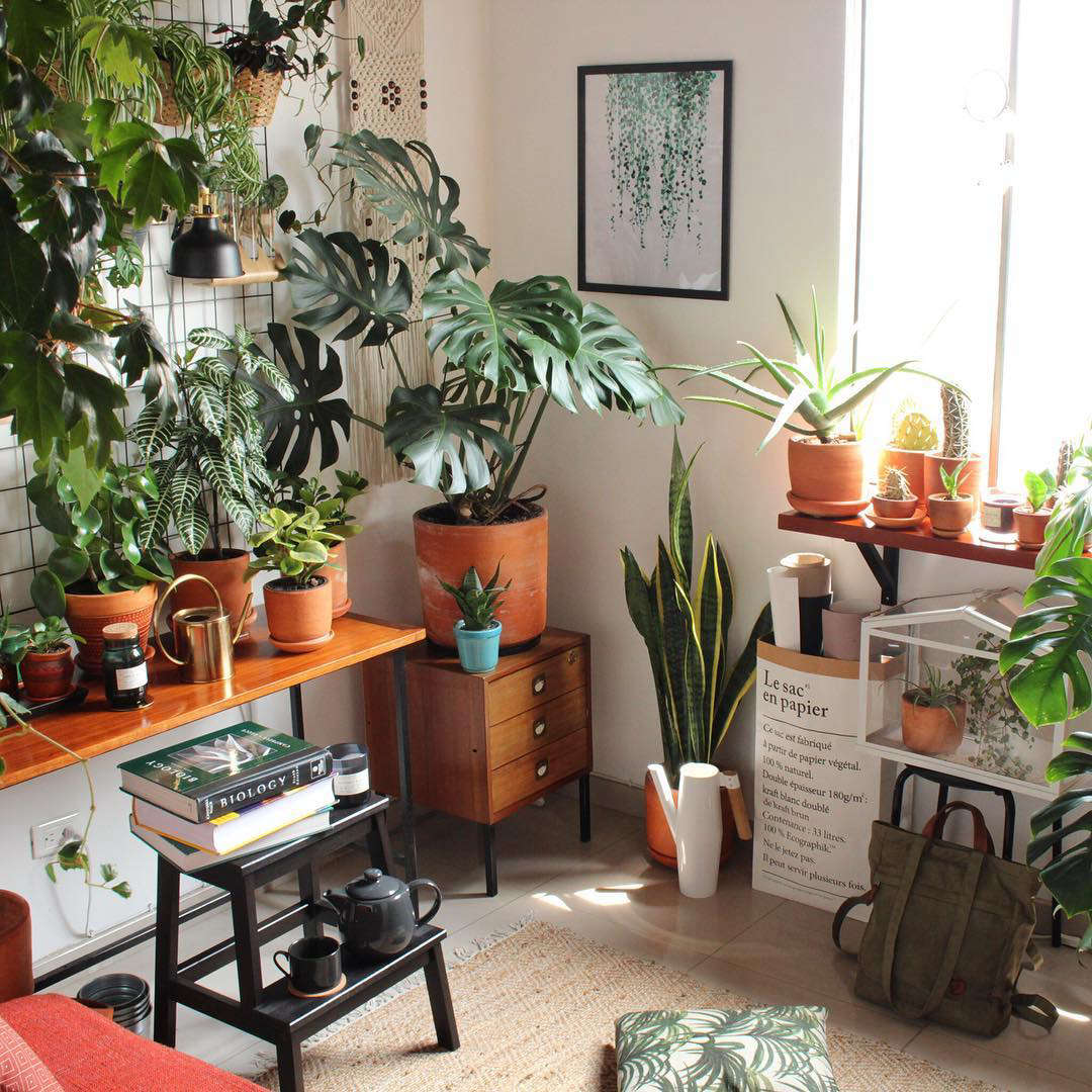 Home Design Ideas Instagram: 10 Houseplant Lovers To Follow On Instagram