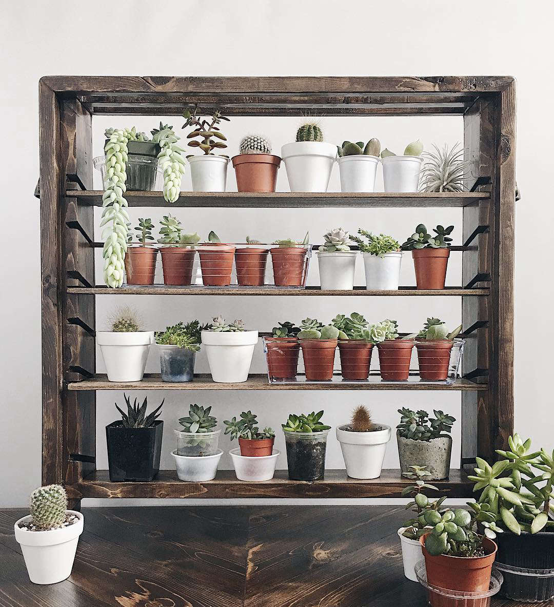 Houseplant 10 Best Hashtags To Explore On Instagram Gardenista