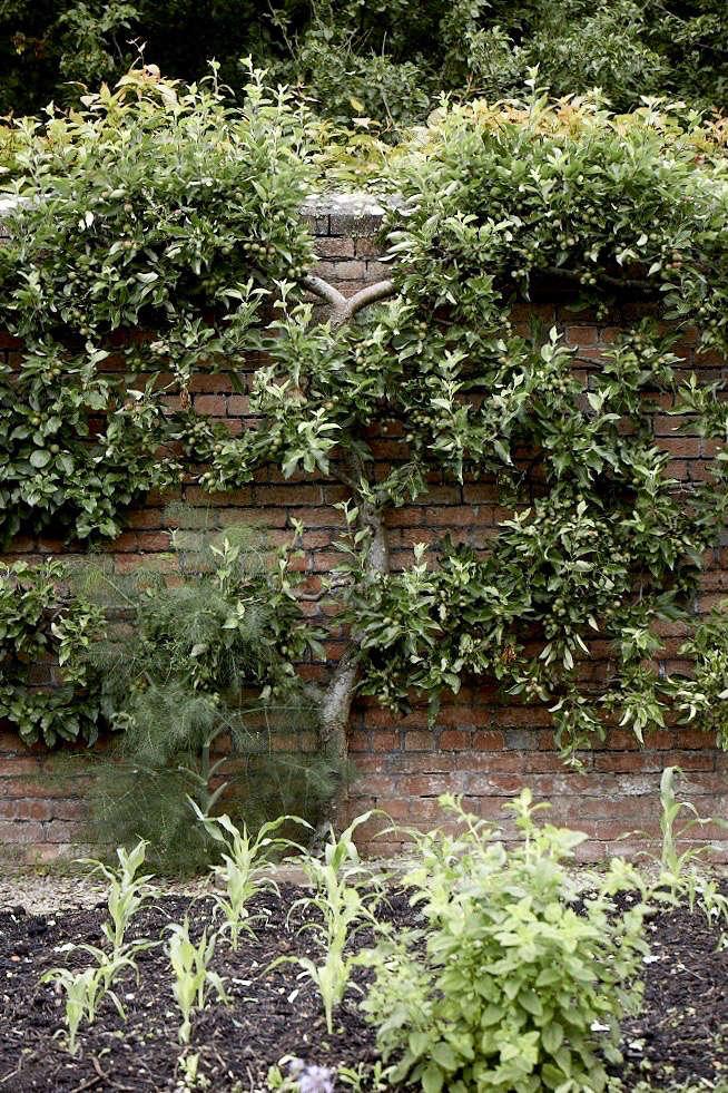 看着亚马逊花园里的花园,还有一堆更多的世界,像在一个小的花园里。来自维特纳·维斯顿的照片。