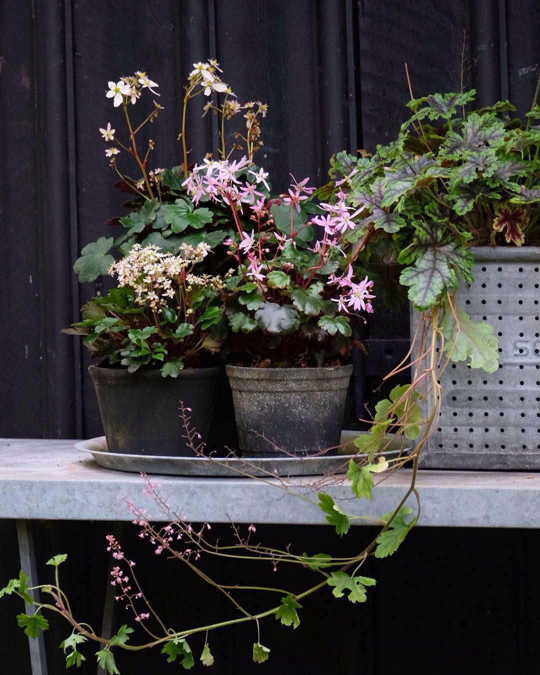 哈蕾和哈丽特在花园里看起来像个可爱的床。在世界上,世界上的一位花园,在荷兰的另一个世界上。卡特勒·斯汀斯。