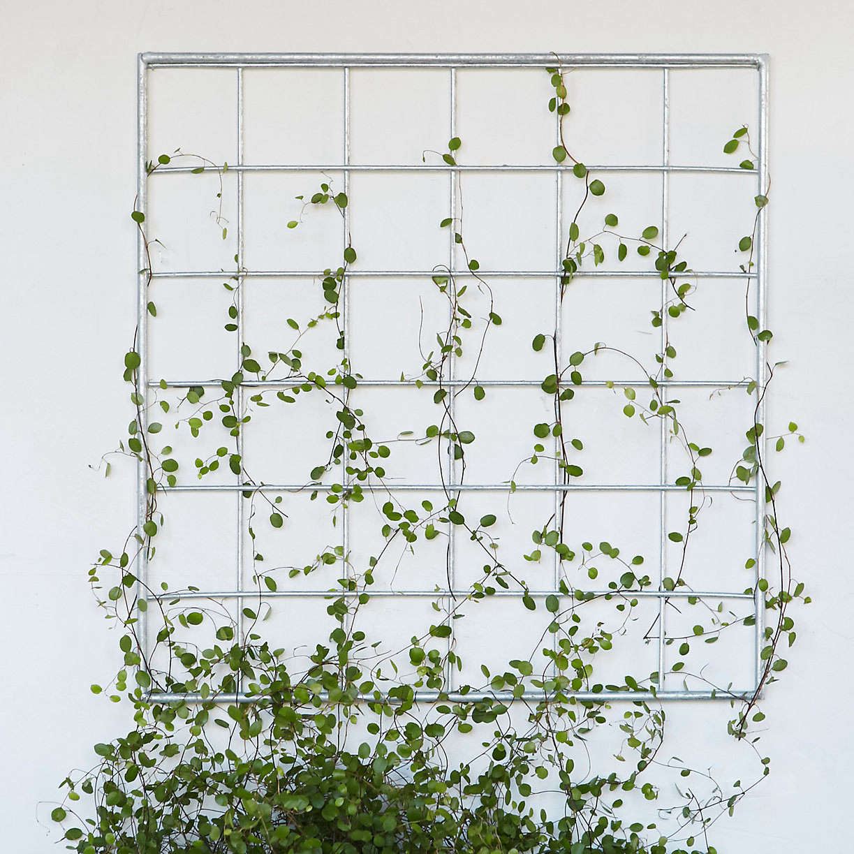 Everything You Need To Know About Trellises Gardenista