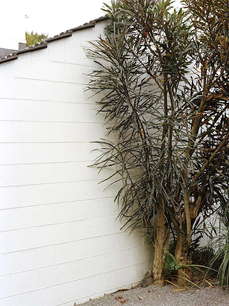 一个月的人知道自己在哪,在阿亚家的土地上,在维蕾亚·拉家的世界里有多大。玛丽·卡弗里的照片。