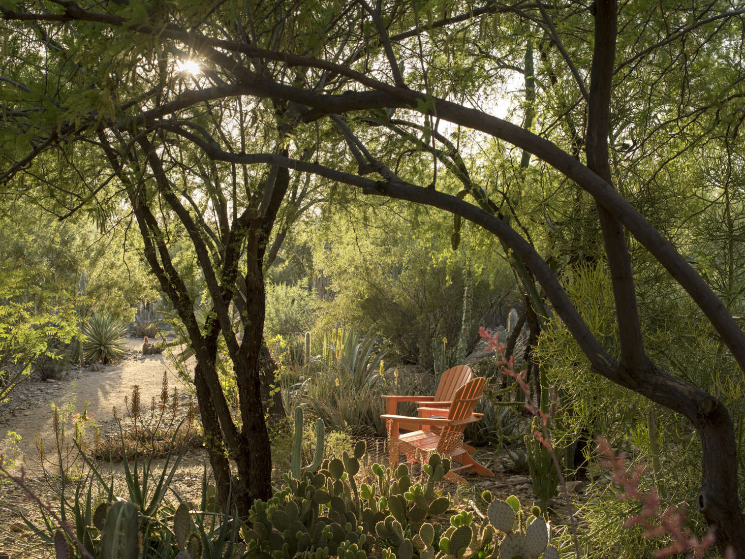 In Paradise Valley, Clients Who Were Avid Gardeners Asked Martino To Design  Places And Paths
