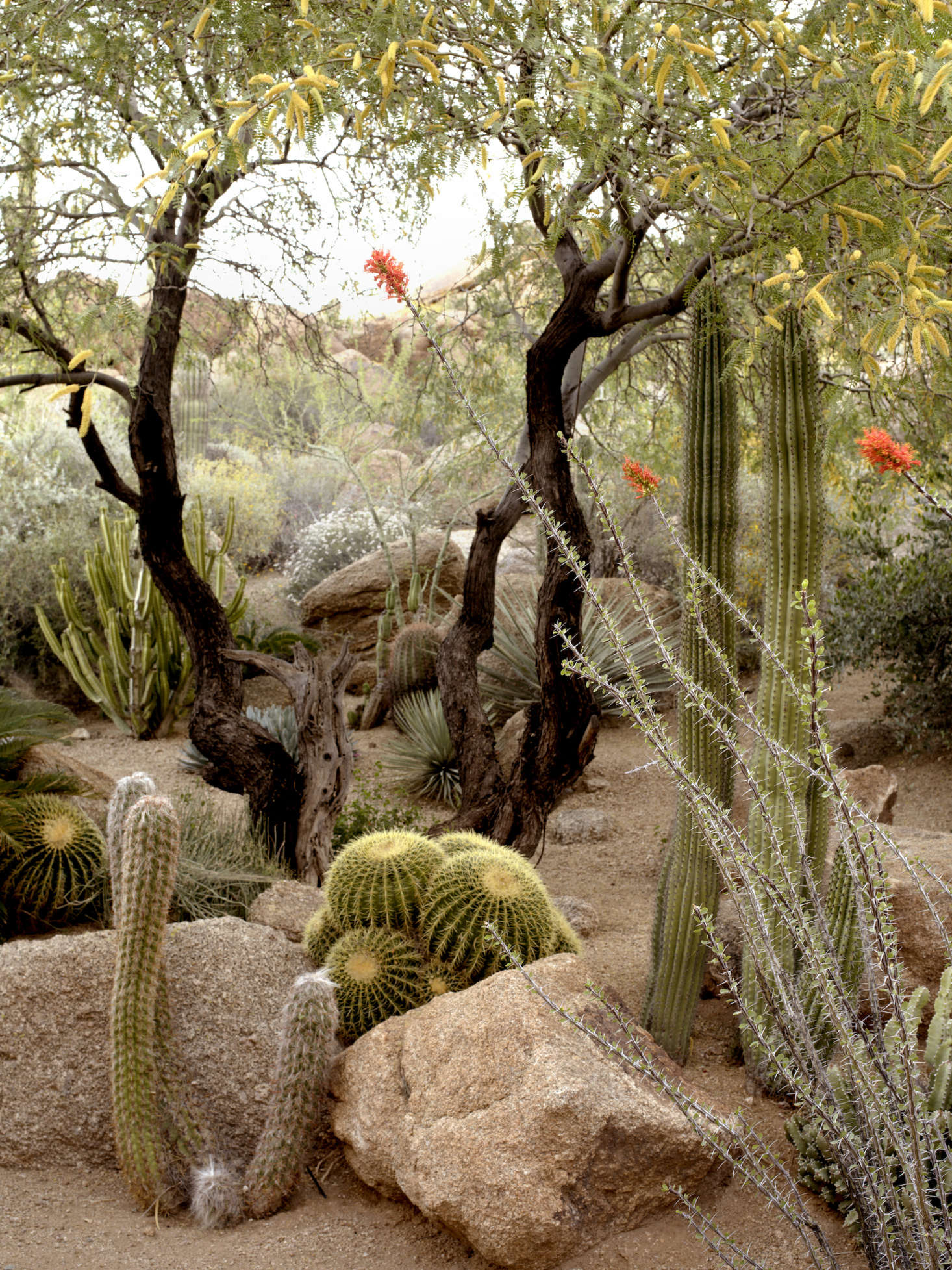 20 Ideas to Steal from Desert Gardens - Gardenista