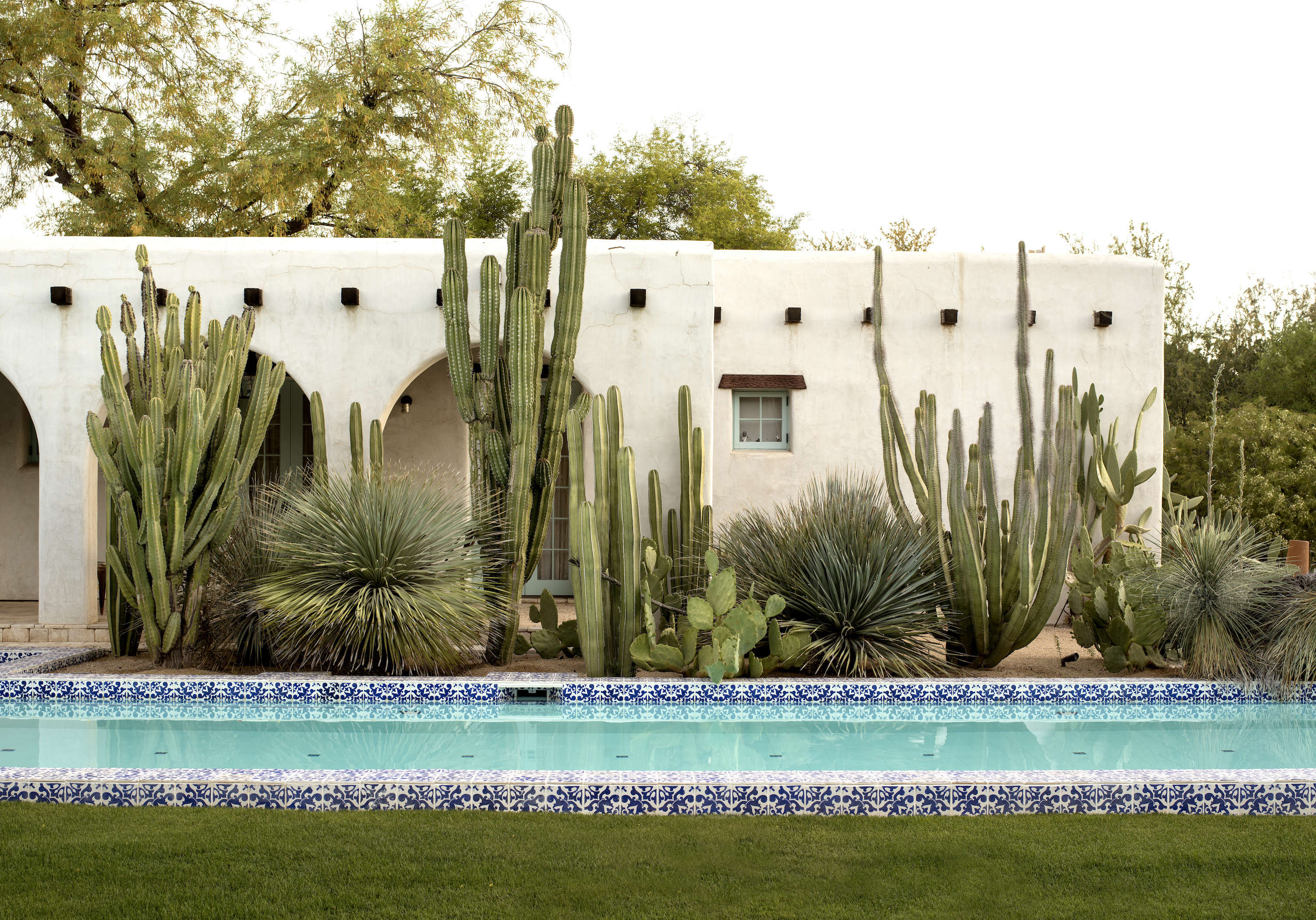 Swimming Pools 11 Best Landscape Plants For Water S Edge
