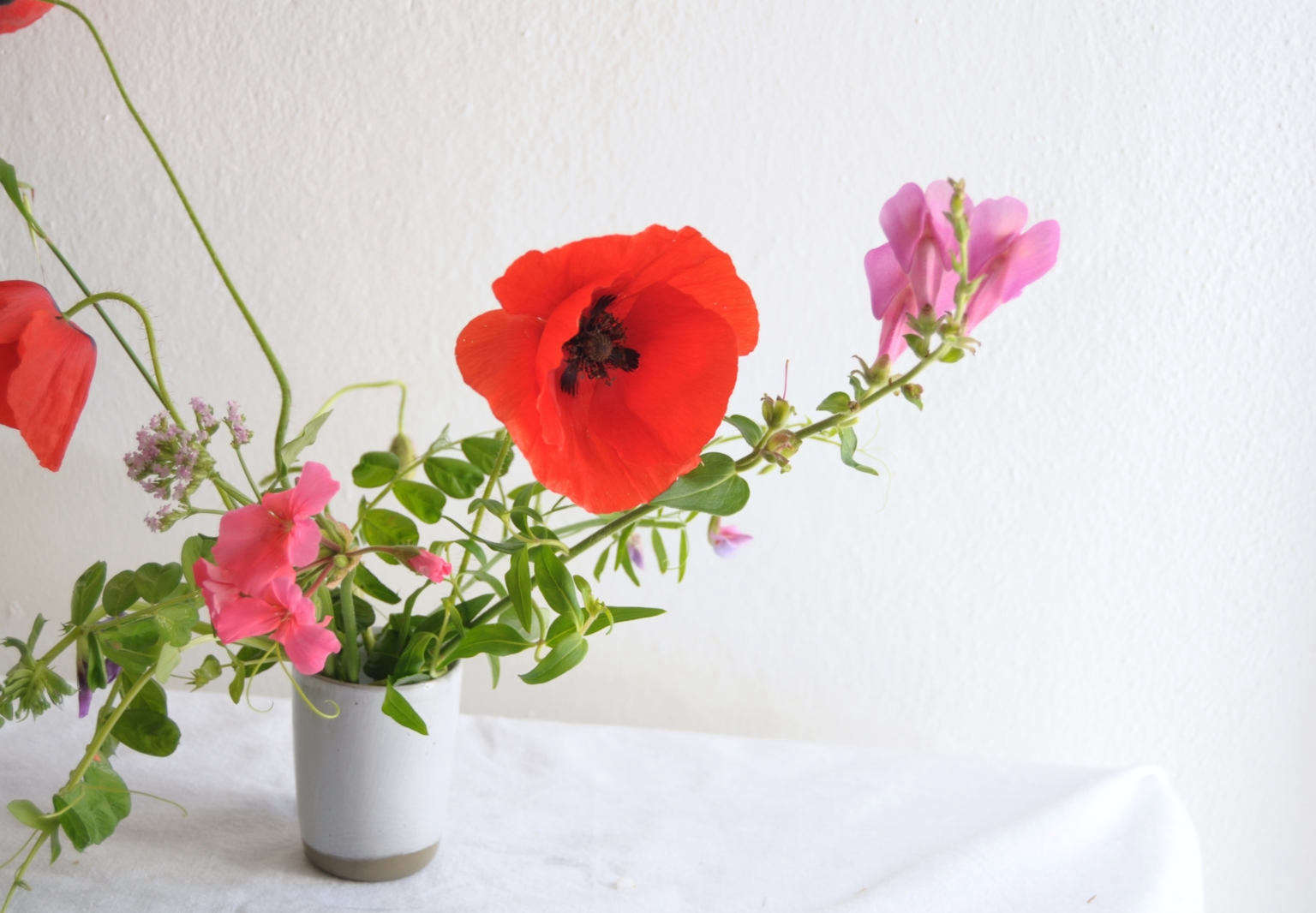 Rethinking poppies how to make a fragile flower last longer the wild red poppies of europe papaver rhoeas have symbolized remembrance for soldiers since world war i when poet john mccrae wrote in flanders field mightylinksfo