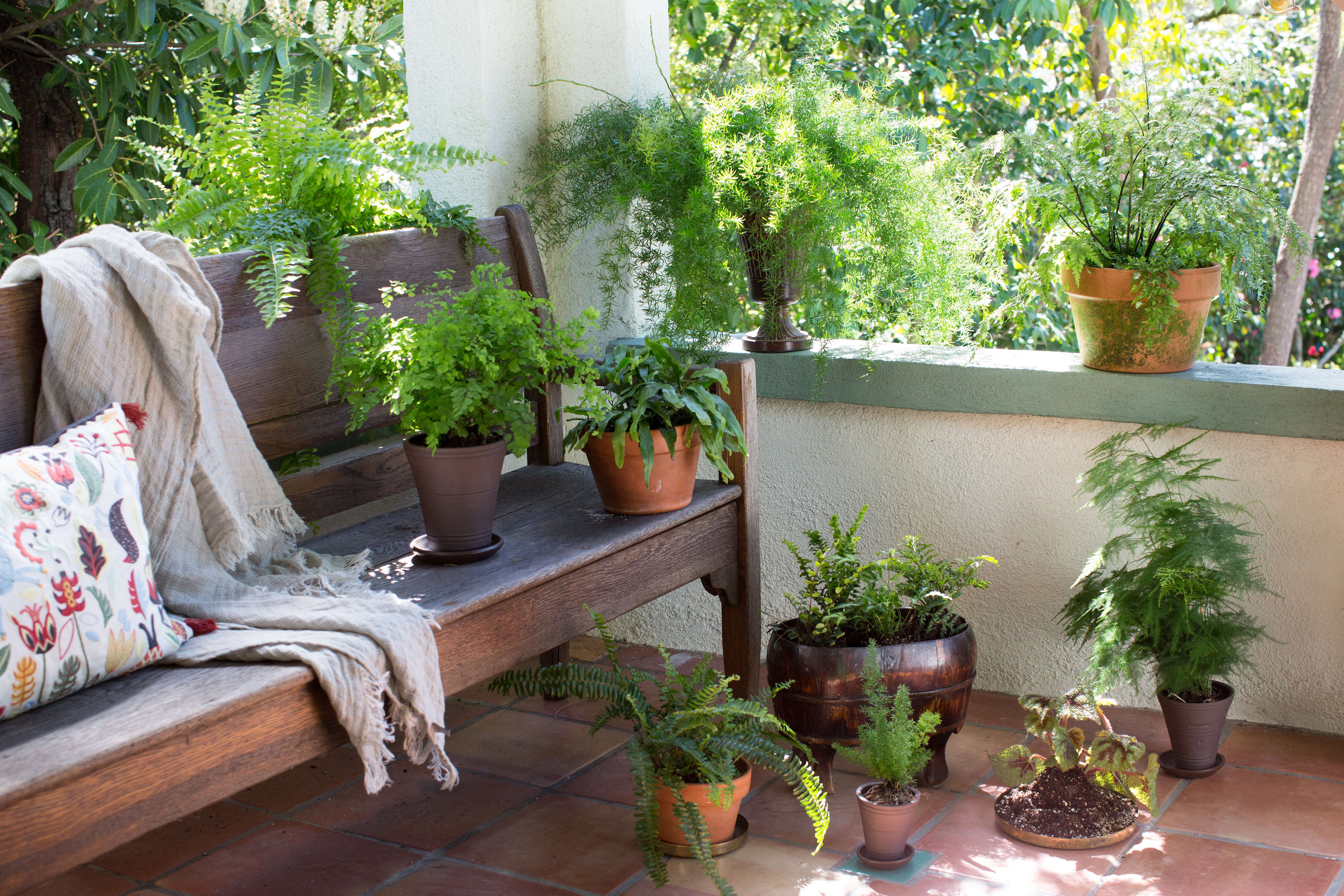 The Houseplant Diaries How I Learned To Stop Worrying And Love
