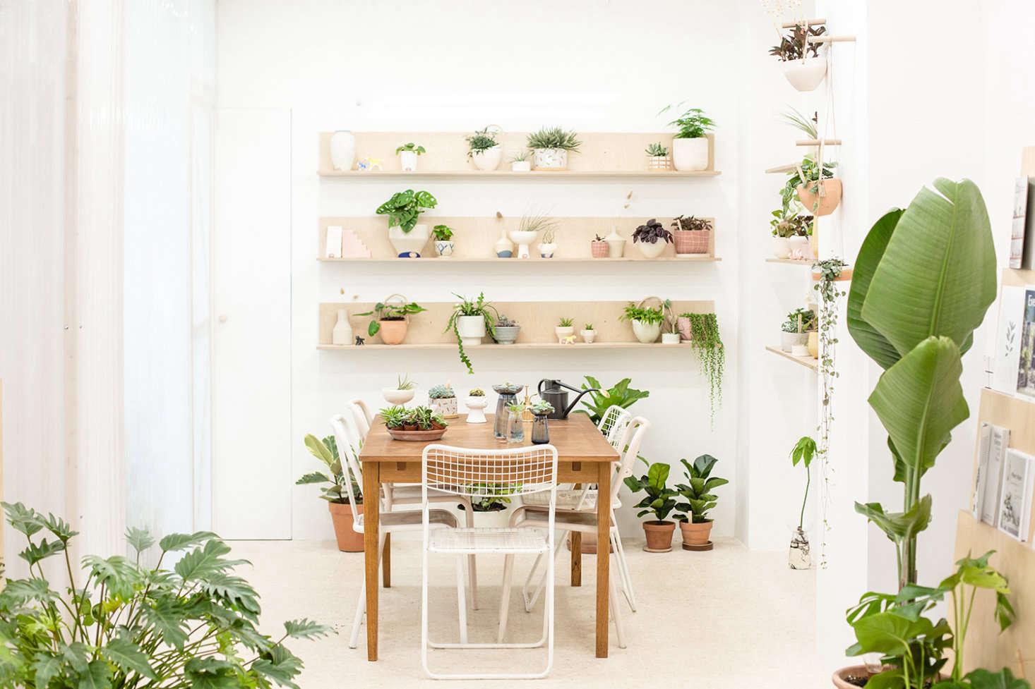 Leaf Shop Vegetal In Paris Houseplants For Sale Canal St