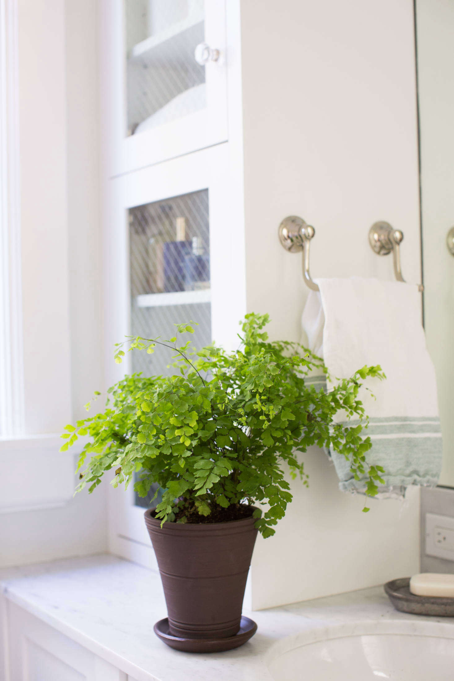 If you dare grow a maidenhair fern (Adiantum raddianum), a humid bathroom makes a nice home. In theory.