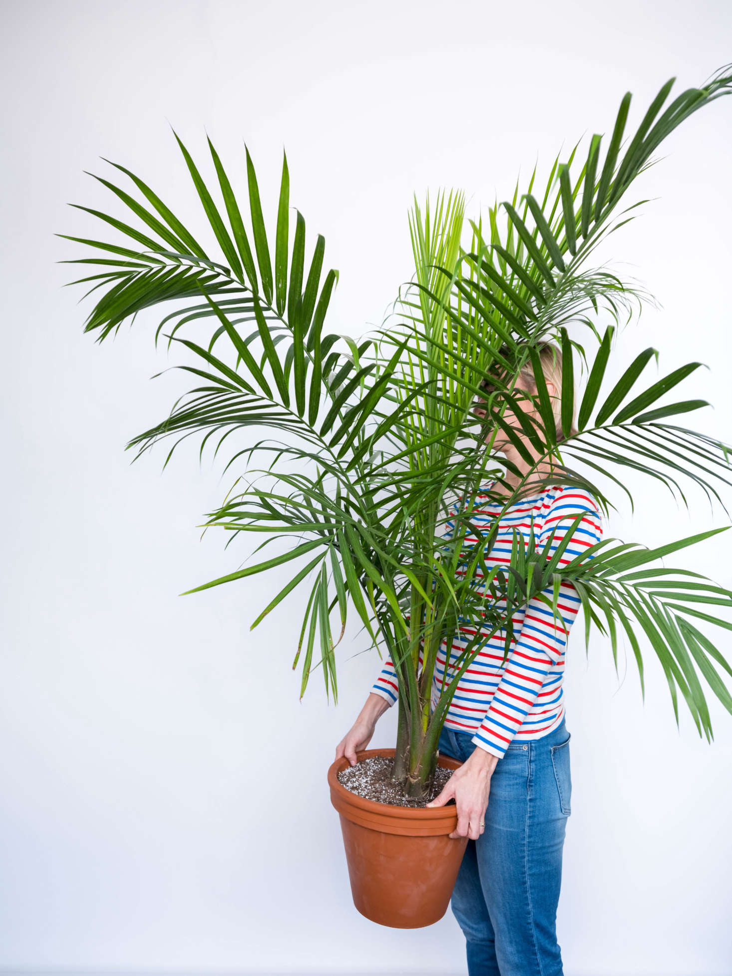 find affordable large potted plants from bloomscape. Black Bedroom Furniture Sets. Home Design Ideas