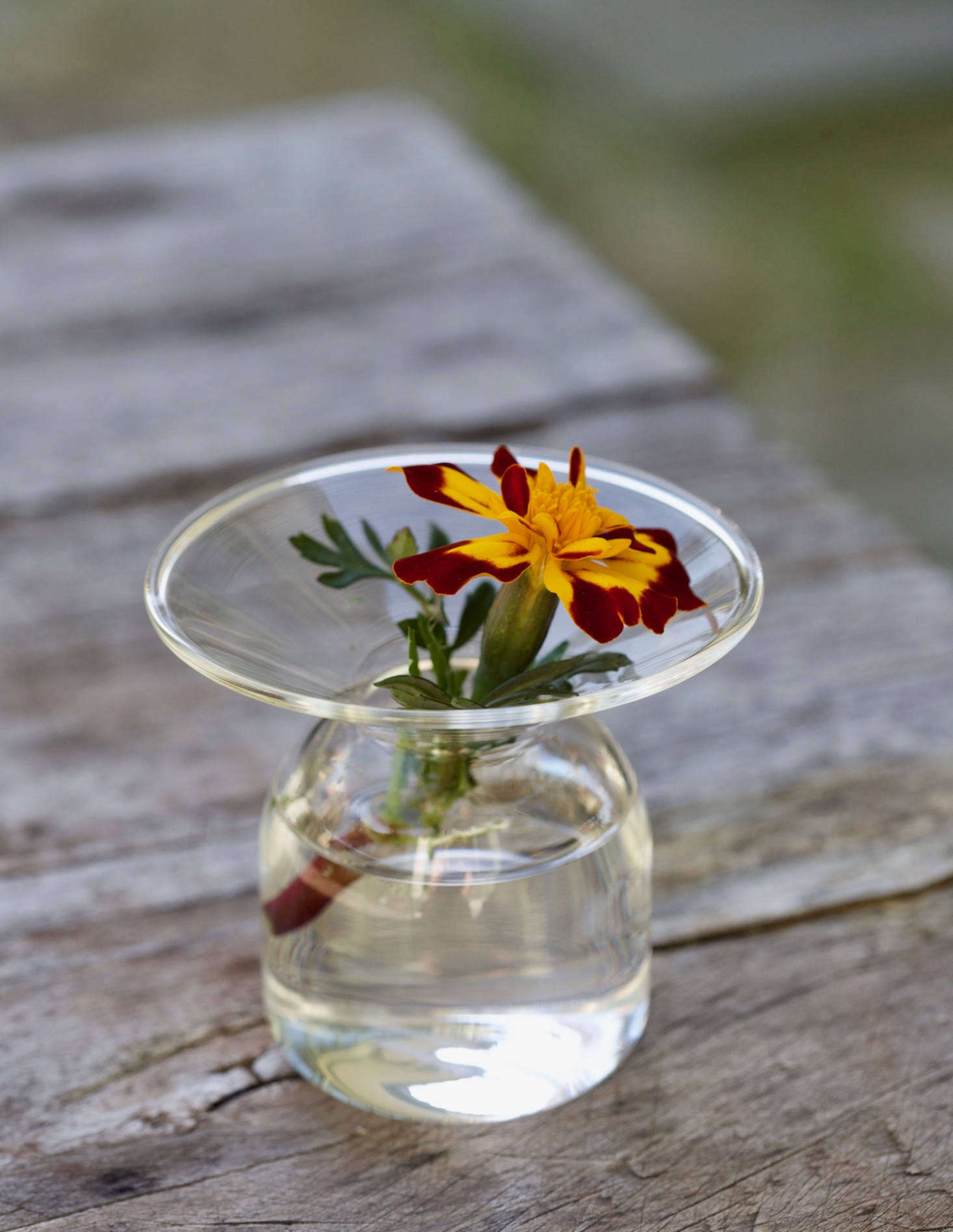 The bright colors of the marigold won't look garish if you arrange stems singly in small bud vases.