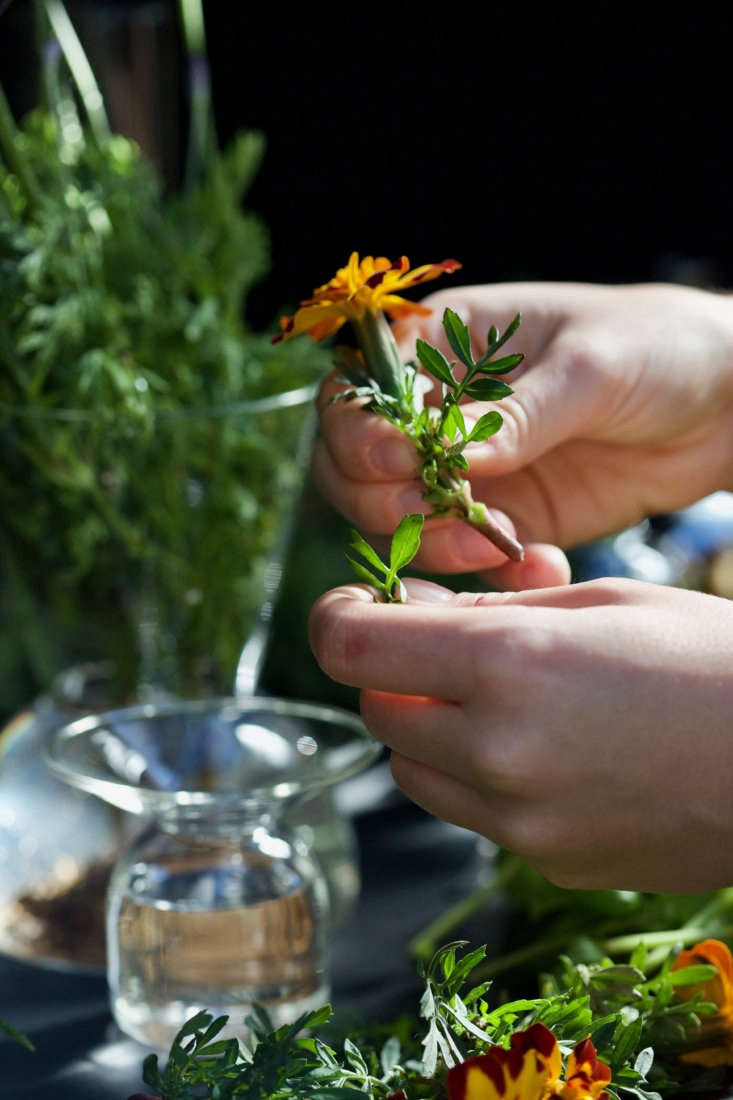 Mosquito Repellent 5 Flowers And Herbs To Keep Pests Away