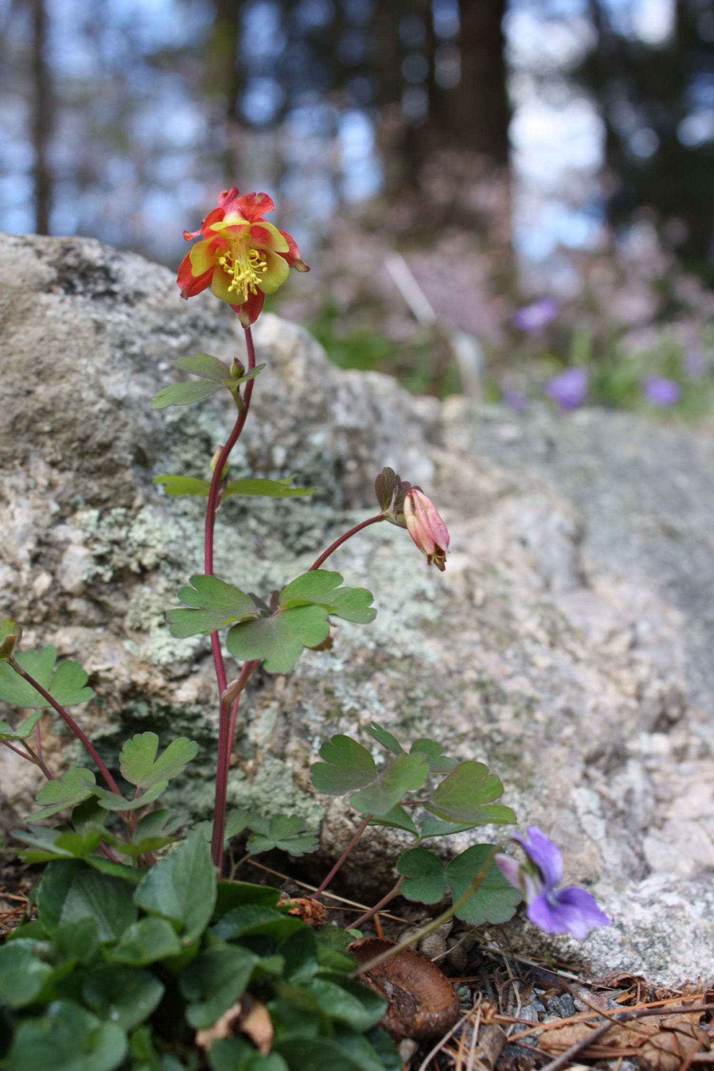 10 Native Wildflowers to Plant in Your Garden