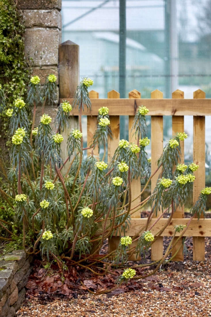 Spurge Your Secret Weapon 6 Best Varieties To Plant In The