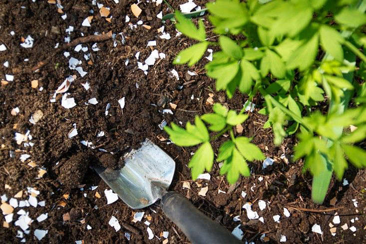 A soil test will tell you what kind of amendments you may need. Adding crushed eggshells can add calcium to your soil and lower its pH as well. Photograph by Justine Hand for Gardenista, from Gardening src=
