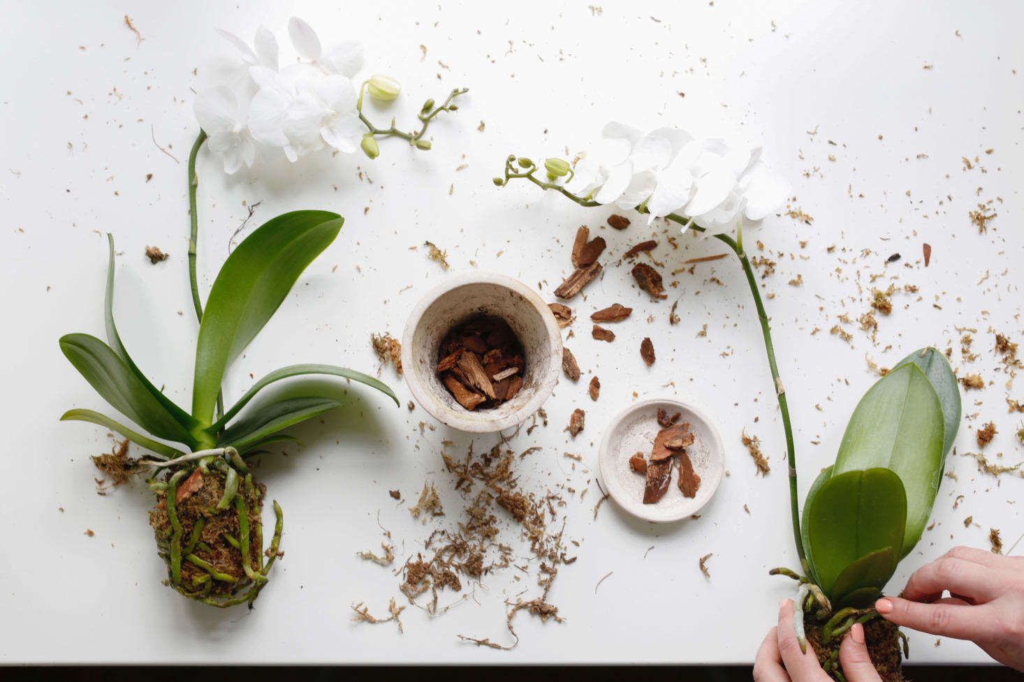 how to make orchid potting mix
