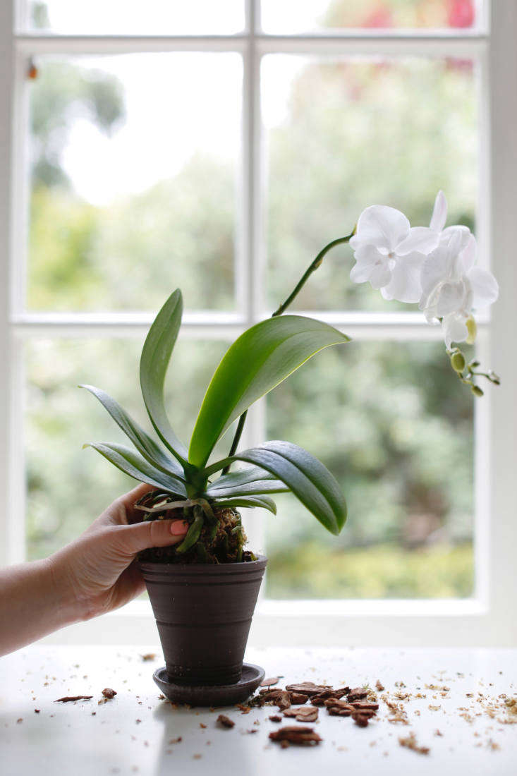 How to Repot an Orchid Step by Step (Without Killing It)