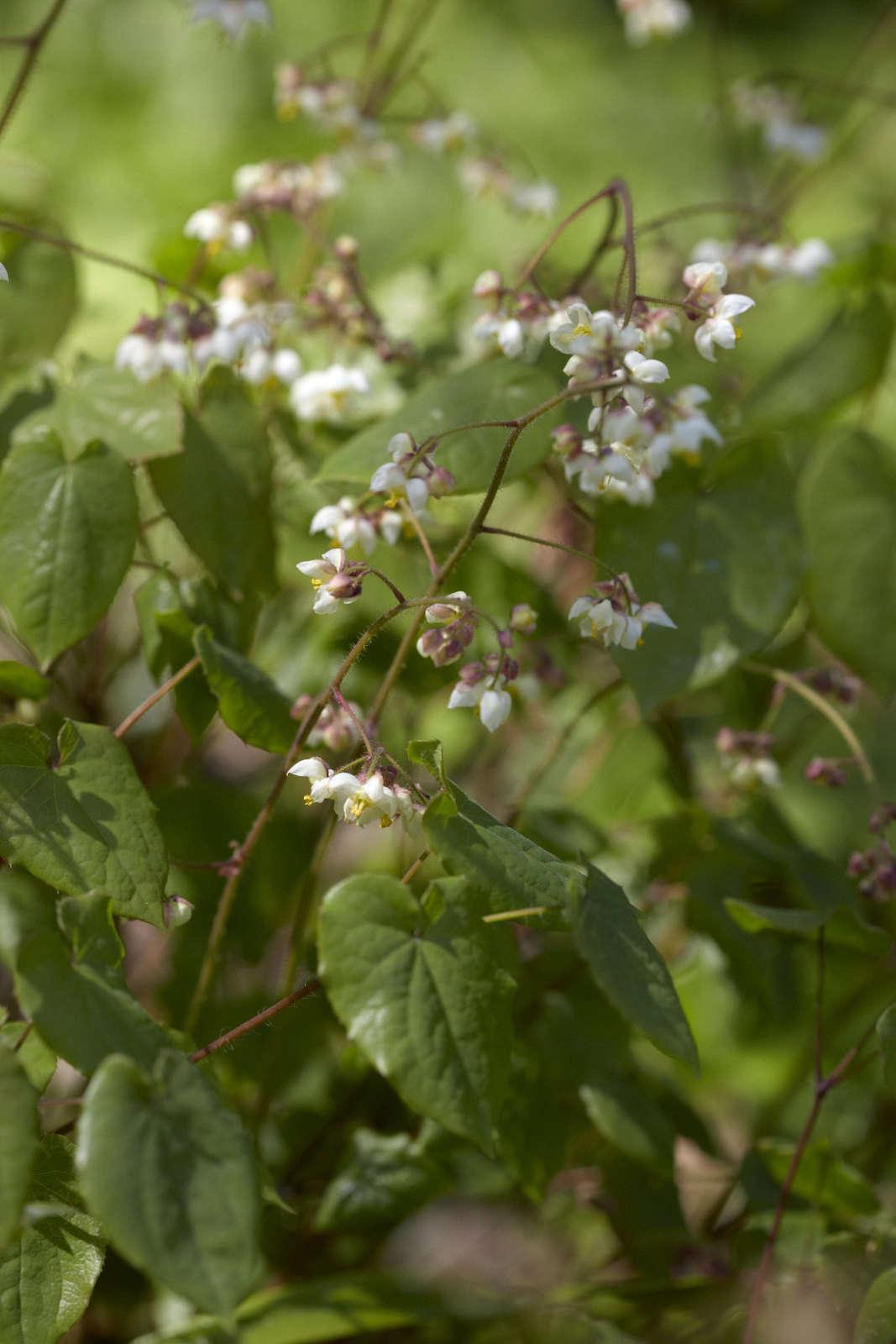 虽然没有绿的绿色树,但在阳光下,它是一种很热的植物。
