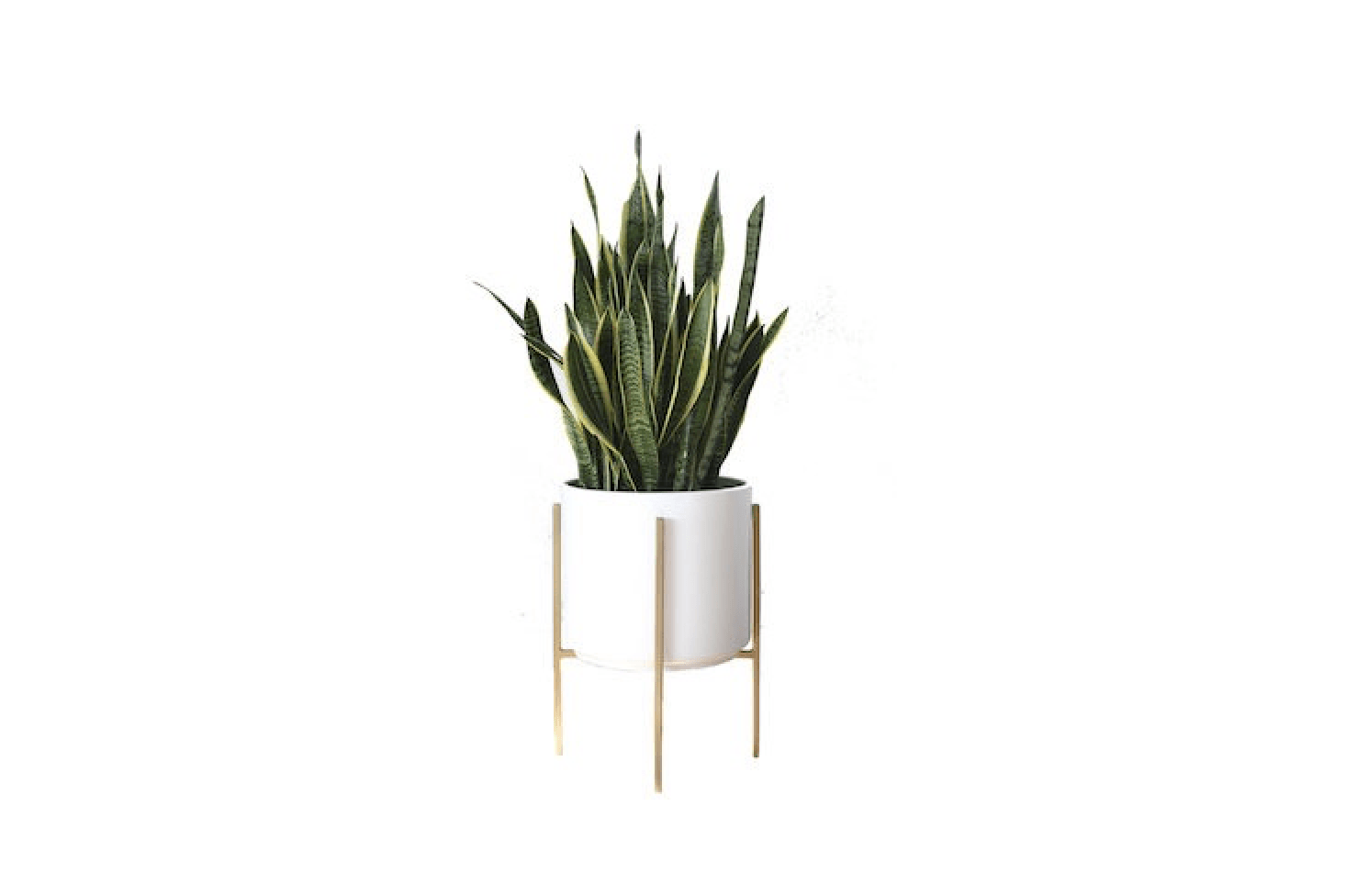 Midcentury Modern Cylinder Planters 10 Stylish Pots For Houseplants