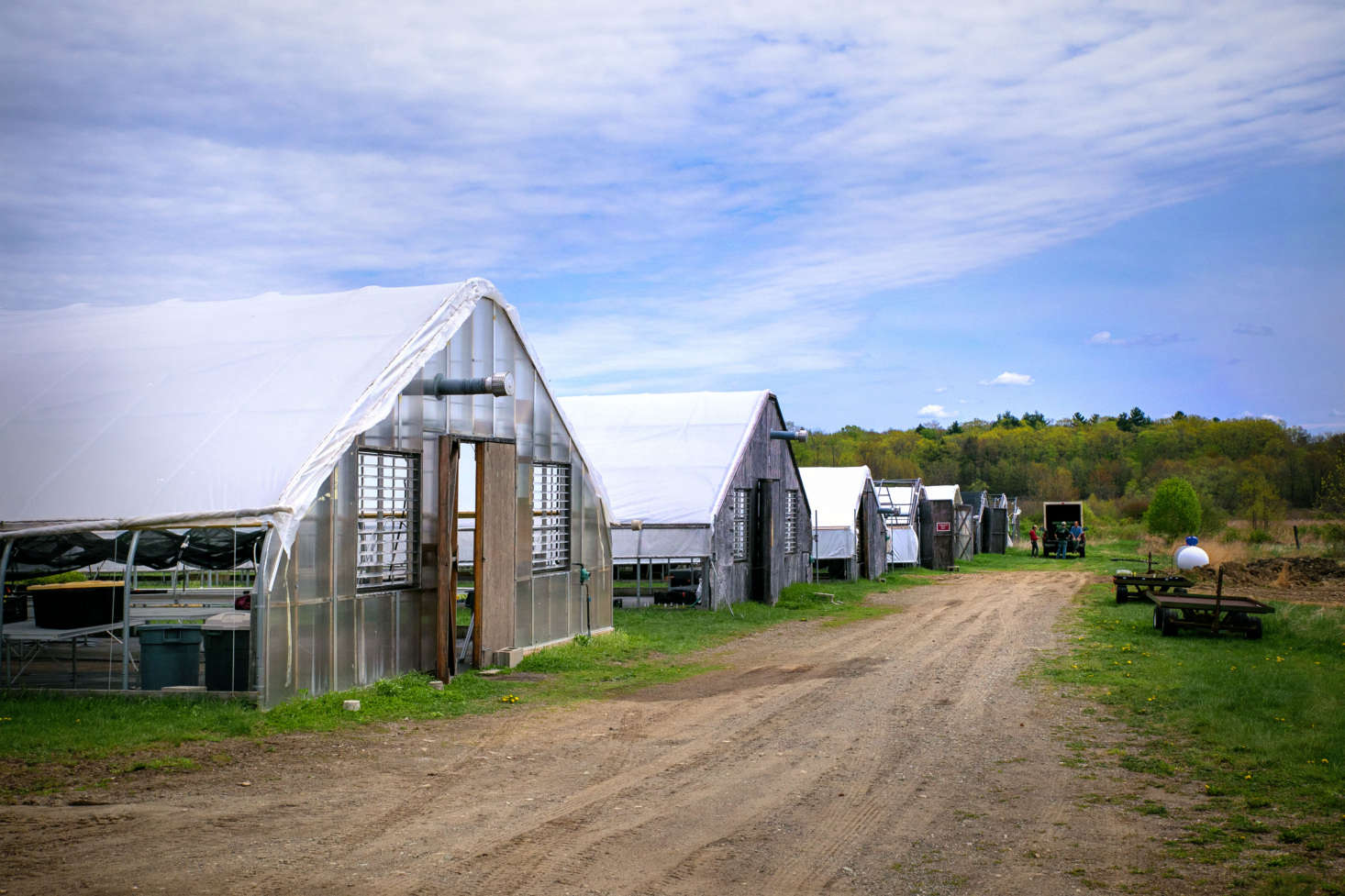 In eight greenhouses, the staff at Nasami propagate native plants grown from wild seeds that have been sustainably collected from around the New England region by the society&#8