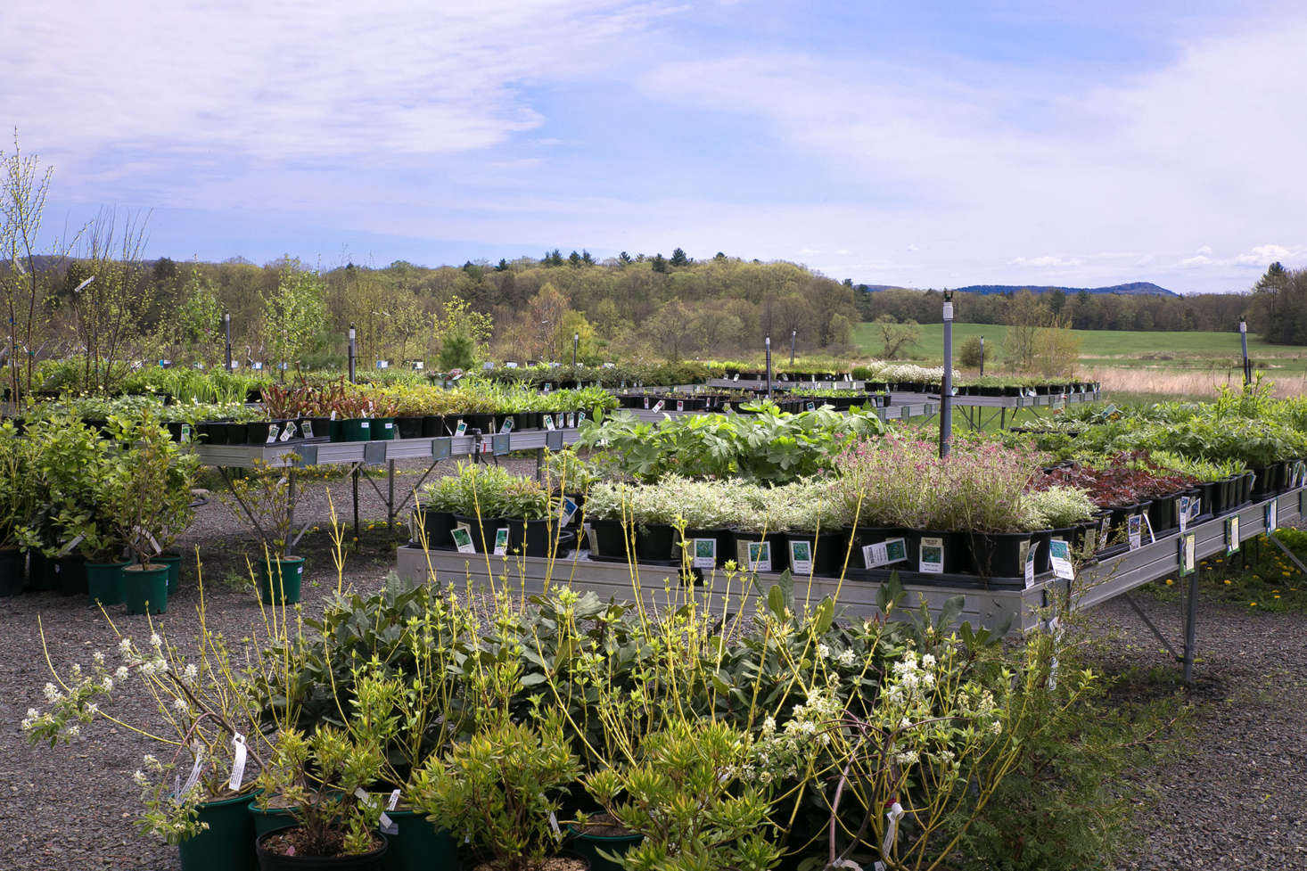In the retail nursery, Nasami sells hundreds of native species including wildflowers, ferns, grass, trees, and shrubs.