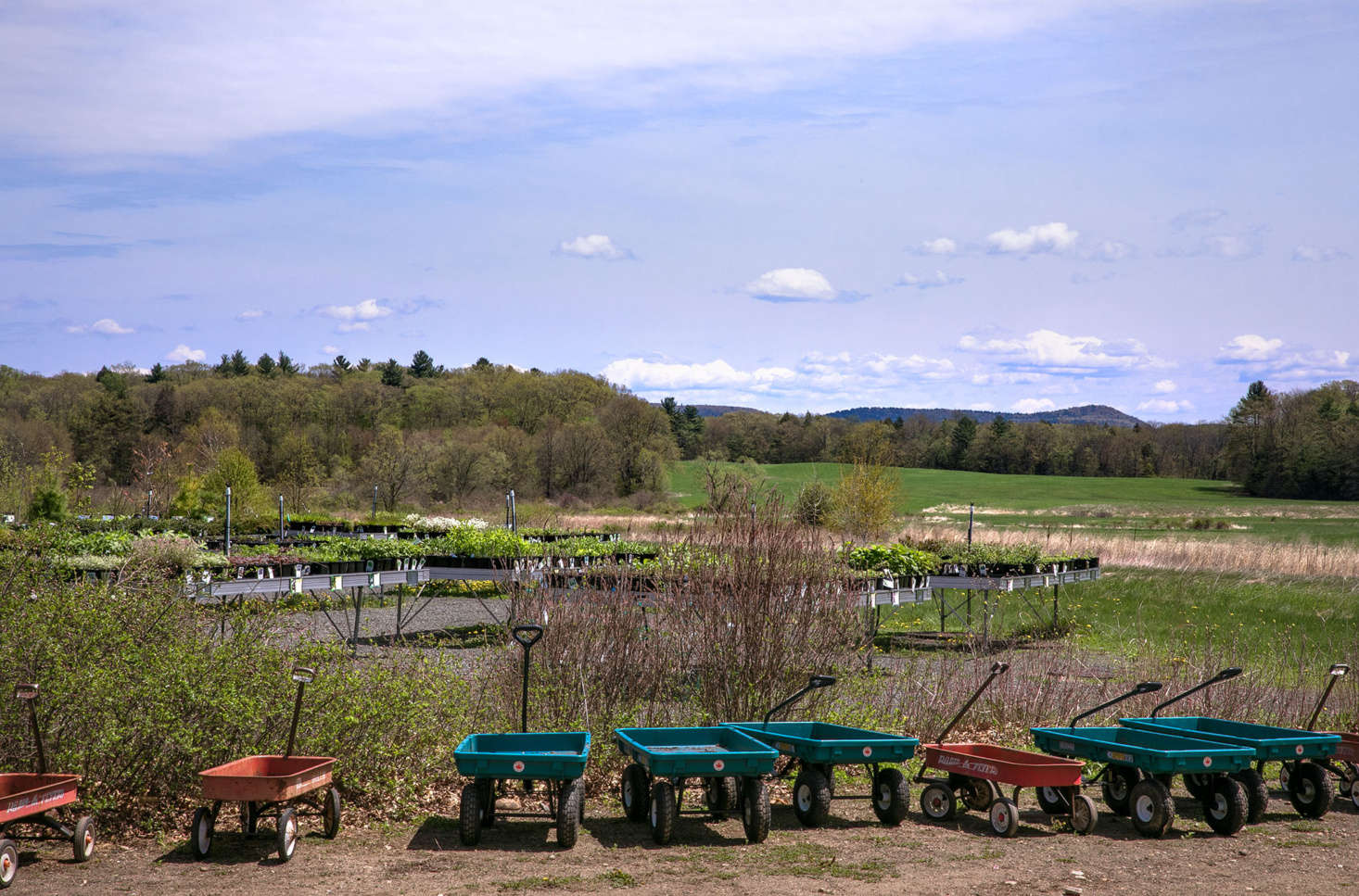 Outside the main building, which overlooks the rolling hills of the Pioneer Valley, carts await shoppers. Beyond the retail area and greenhouse, wild fields are used as native pollinator habitats and for seed collection.