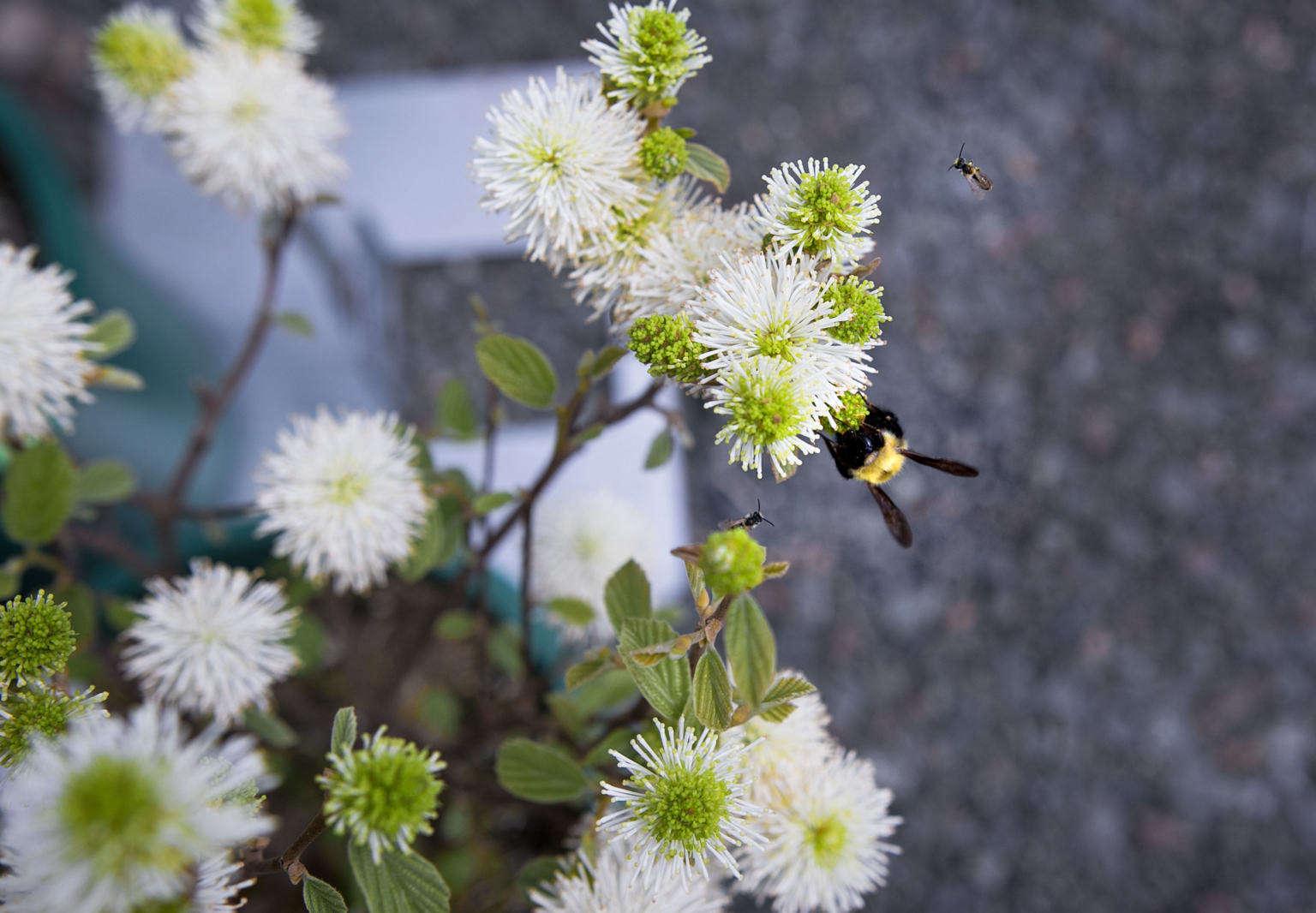 Pollinator Gardens: 8 Easy Steps to Design a Landscape with ... on native perennial garden, native wildflower garden, native plant garden, native bee habitat,