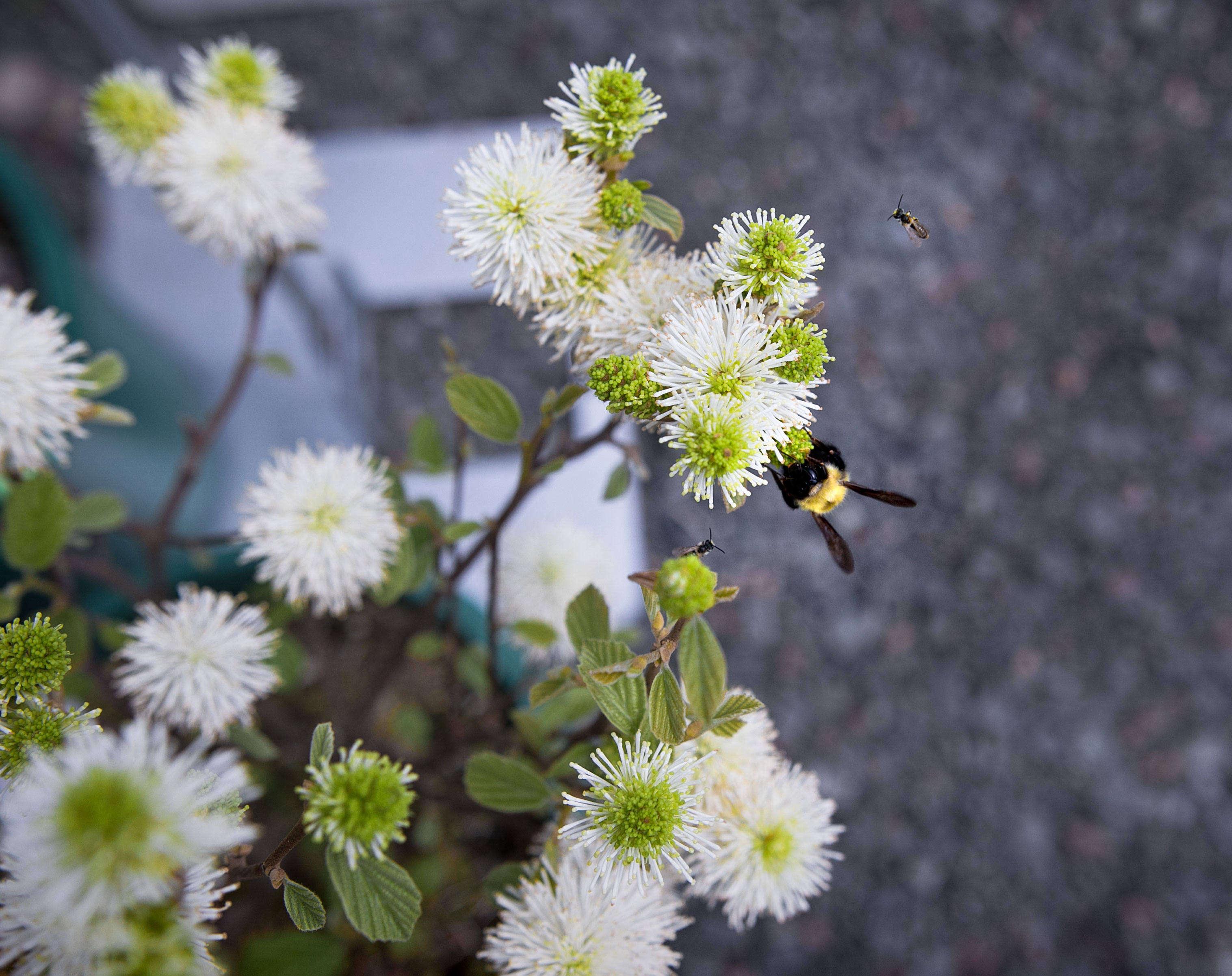 nasami-farm-ne-wildflower-society-bees Native Wildflower Garden Designs on wild garden design, herb garden design, cactus garden design, organic garden design, sand design, gravel design, small garden design,
