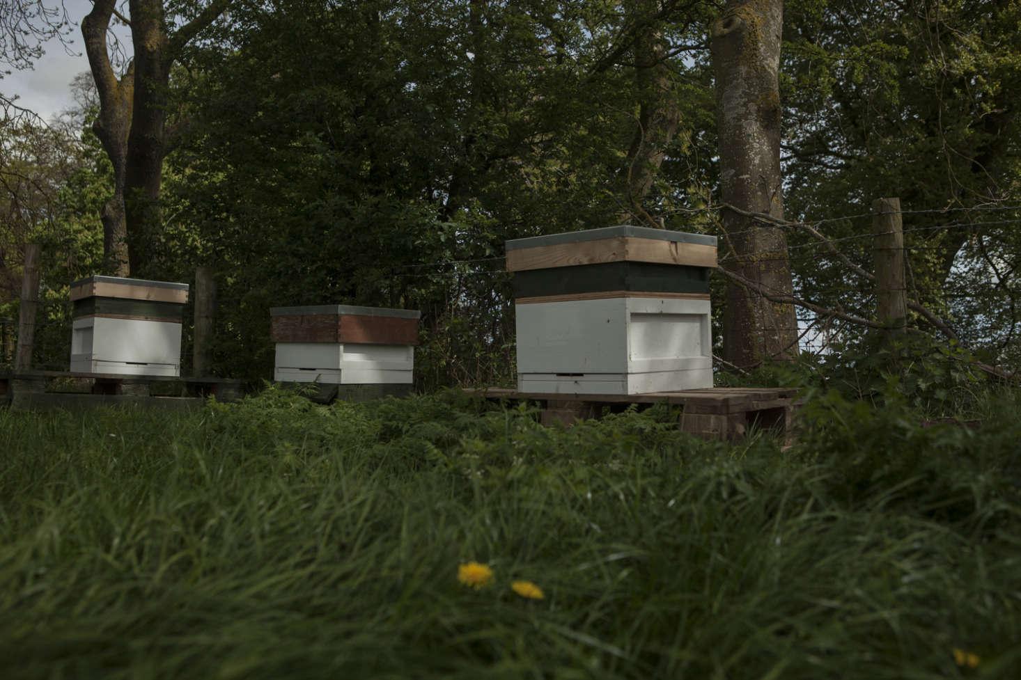 Hives at Falls Farm.