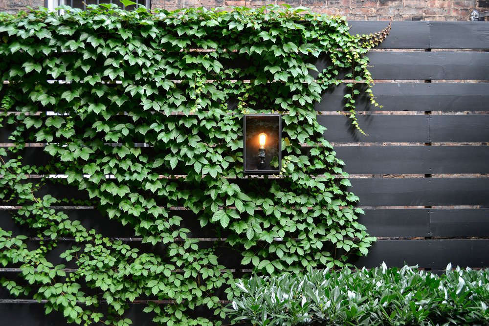 How To Successfully Grow Boston Ivy A Field Guide To Planting Care And Design On Gardenista