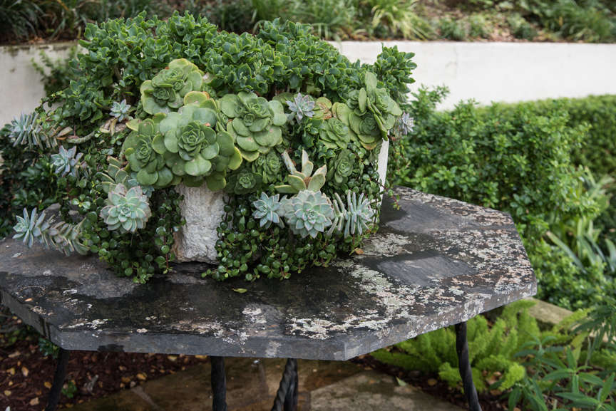 10 Things Nobody Tells You About Succulents Gardenista