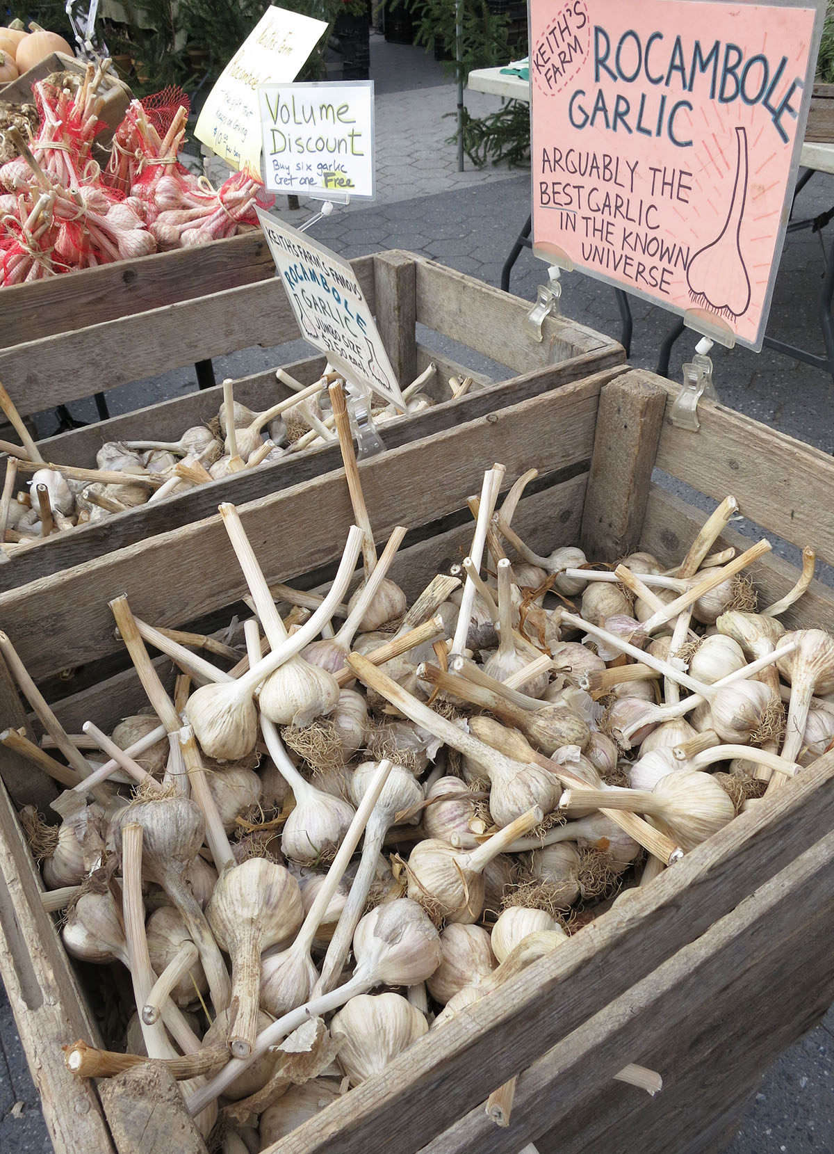 Any head of garlic will give you the individual cloves you need to grow your own crop.