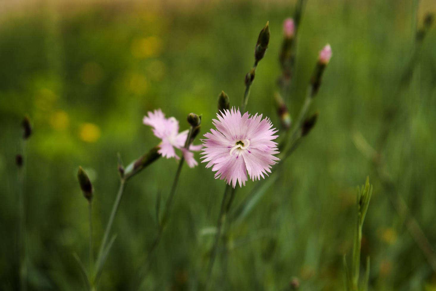 我。草草。来自CRRRRRRRRSSE的照片。