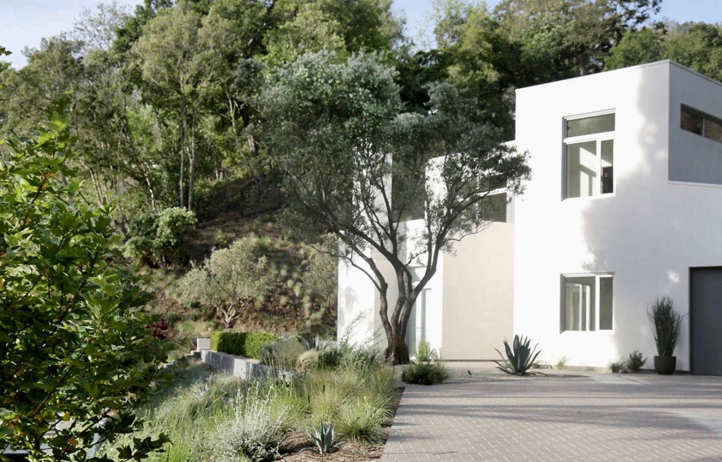 Genius Garden Ideas 10 Landscapes With Olive Trees Gardenista
