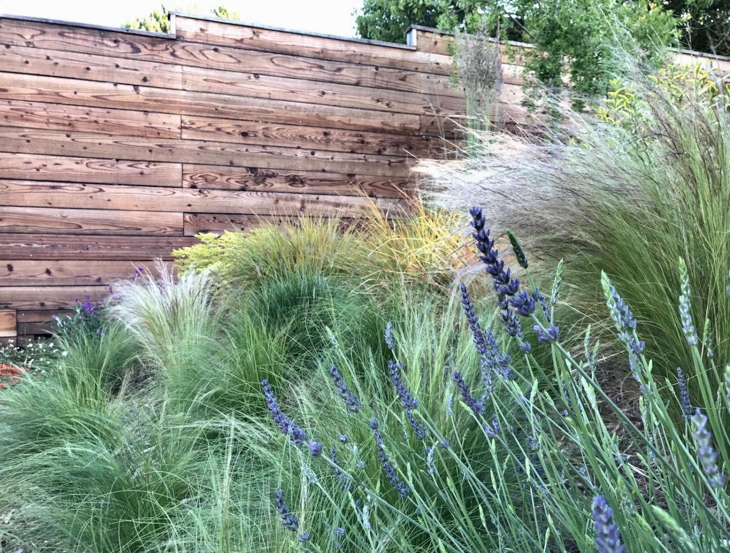 Gardening 101 Feather Reed Grass Gardenista