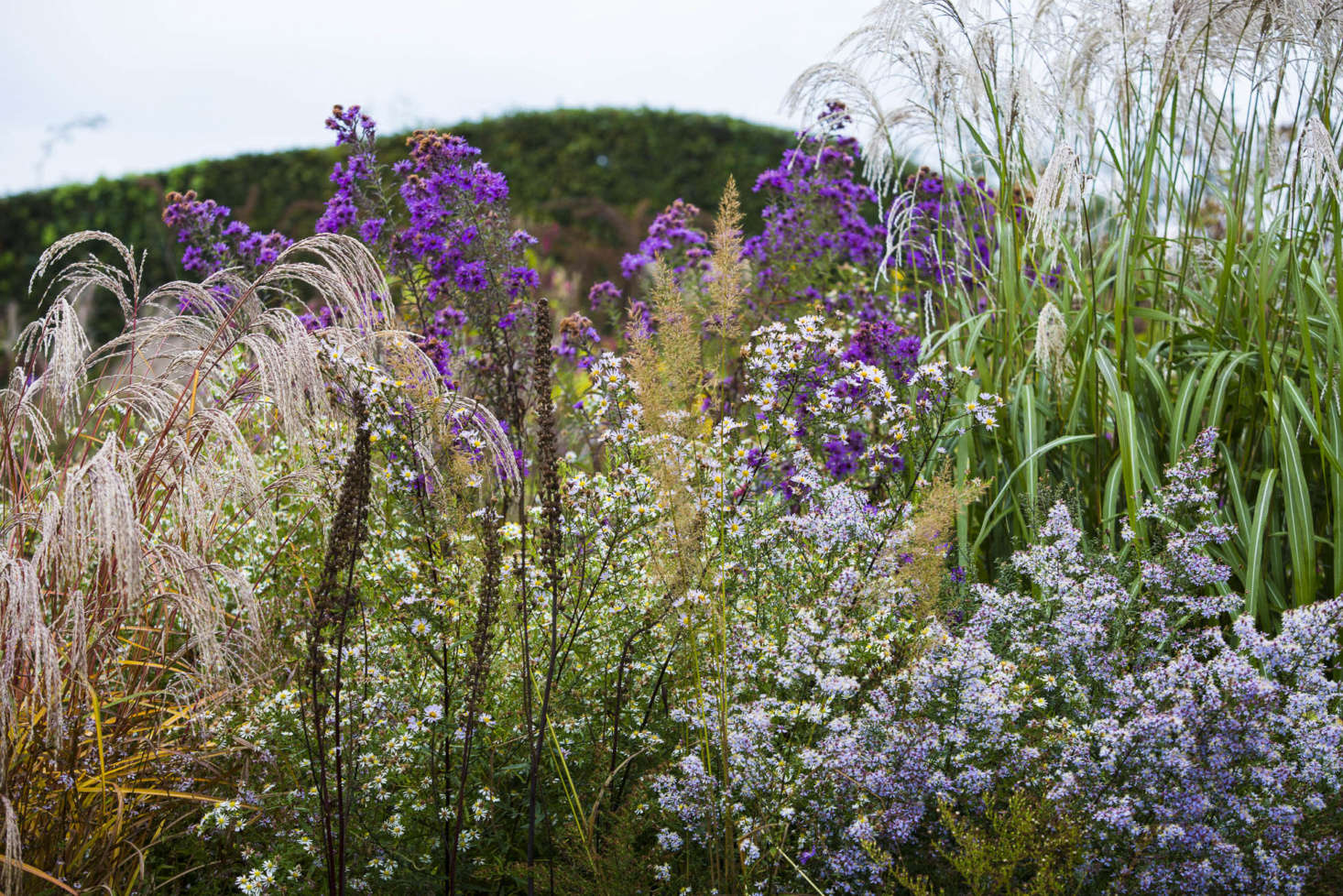 The Plume, or Feather Garden. Herbaceous perennials and grasses are backed up by a wavy hedge.