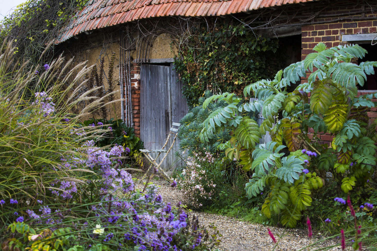 Informal planting around the old barns, including euphorbia and Melianthus major.